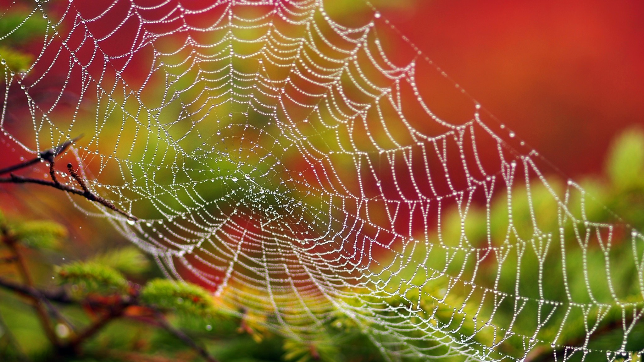2048x1152  Wallpaper spider web, drops, dew, close-up
