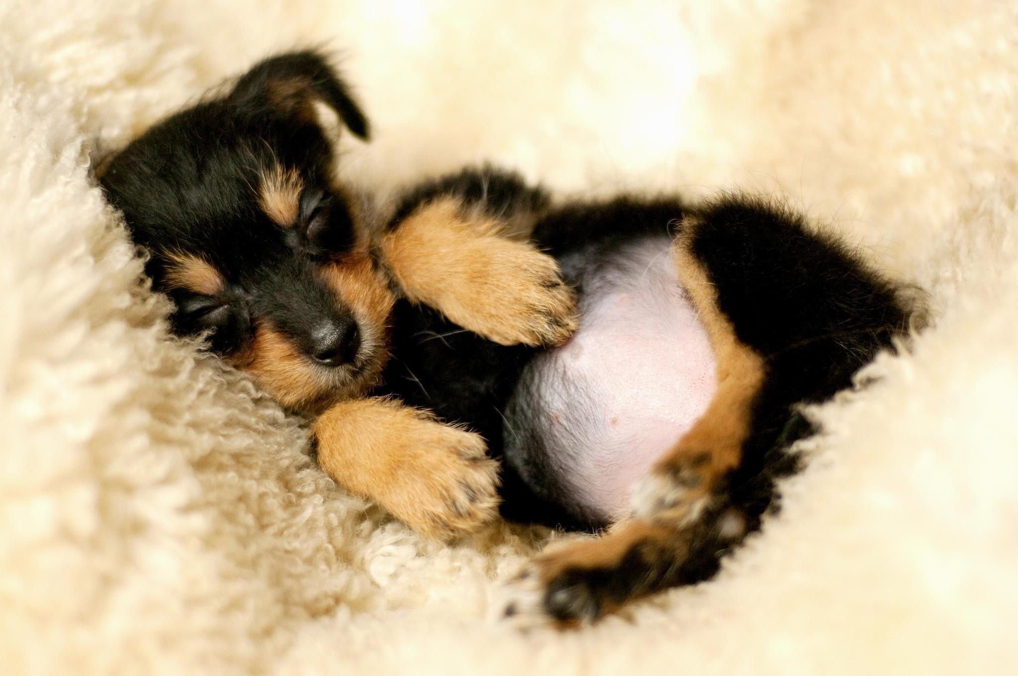 Cute Sleeping Dog Wallpaper 73798 Movieweb