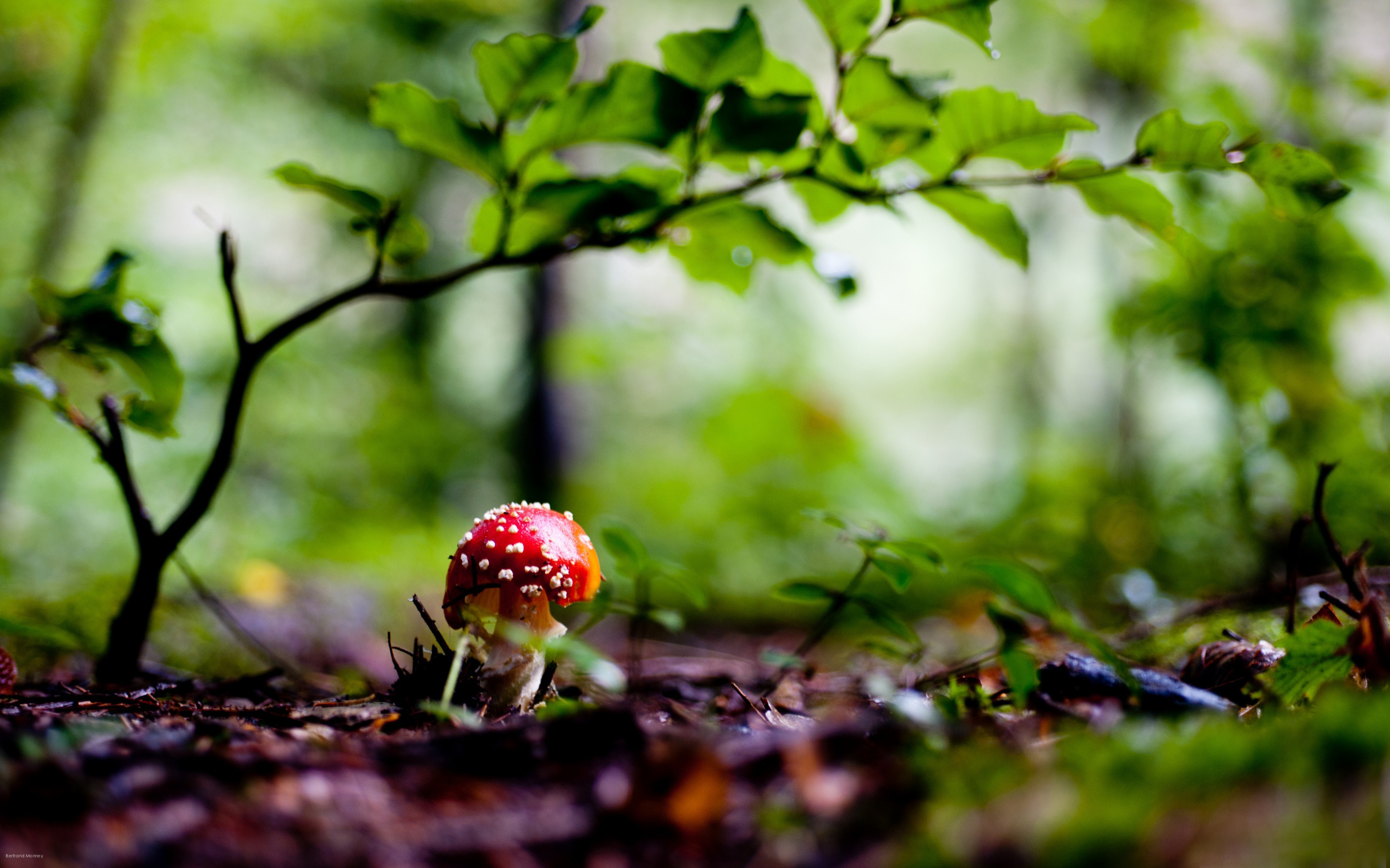 Fantastic Free Images for a Mushroom Wallpaper Background or
