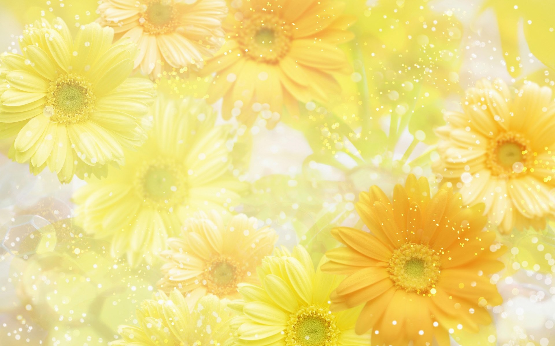 Yellow Flower Wallpaper 67 Images
