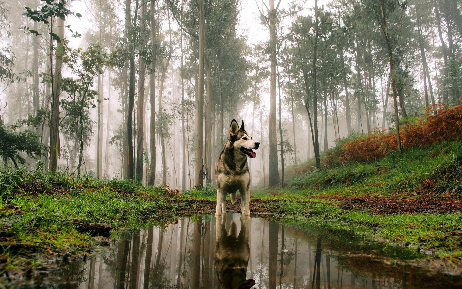 dog desktop wallpaper (67+ images)