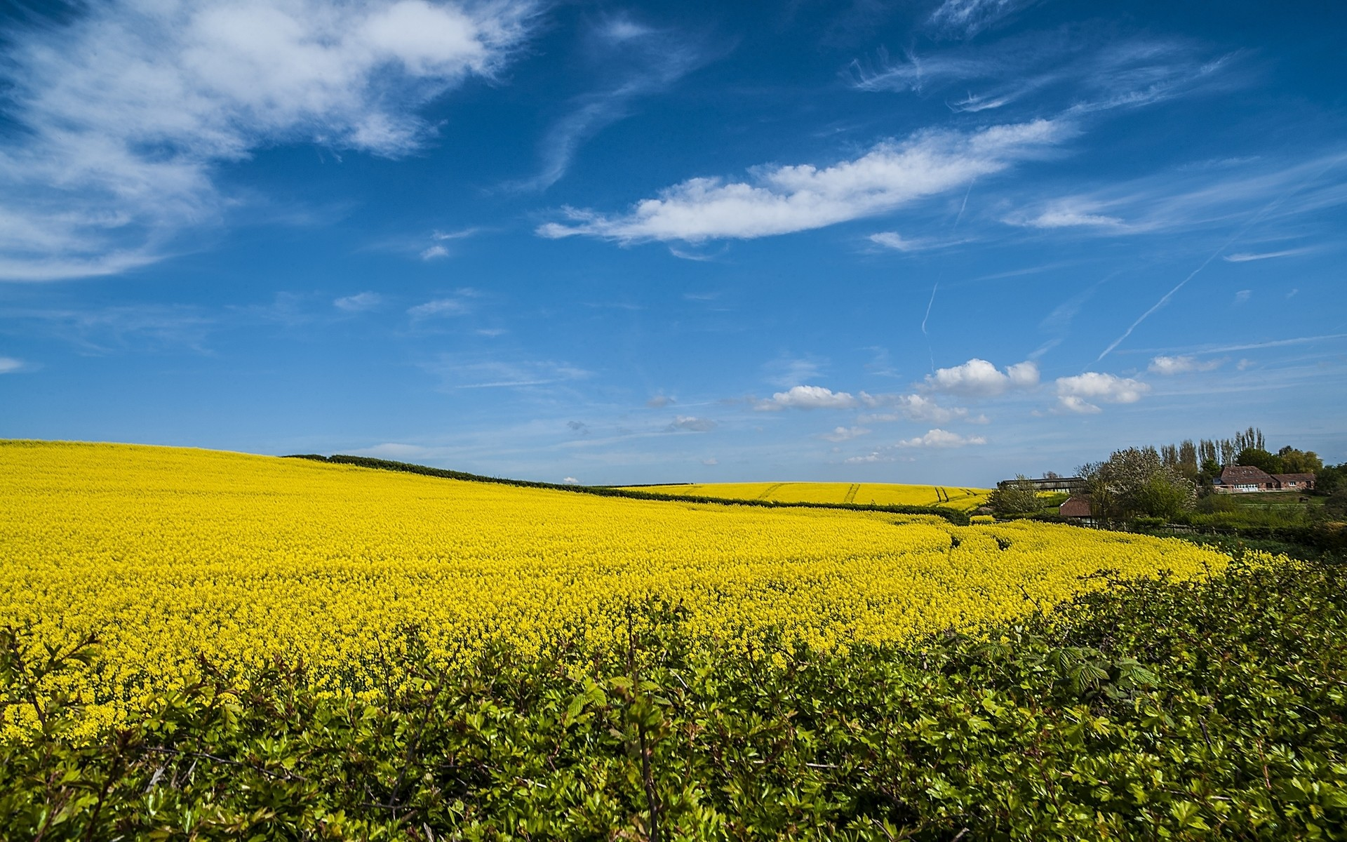 1920x1200 Magnificent Rape Field Houses wallpapers and stock photos