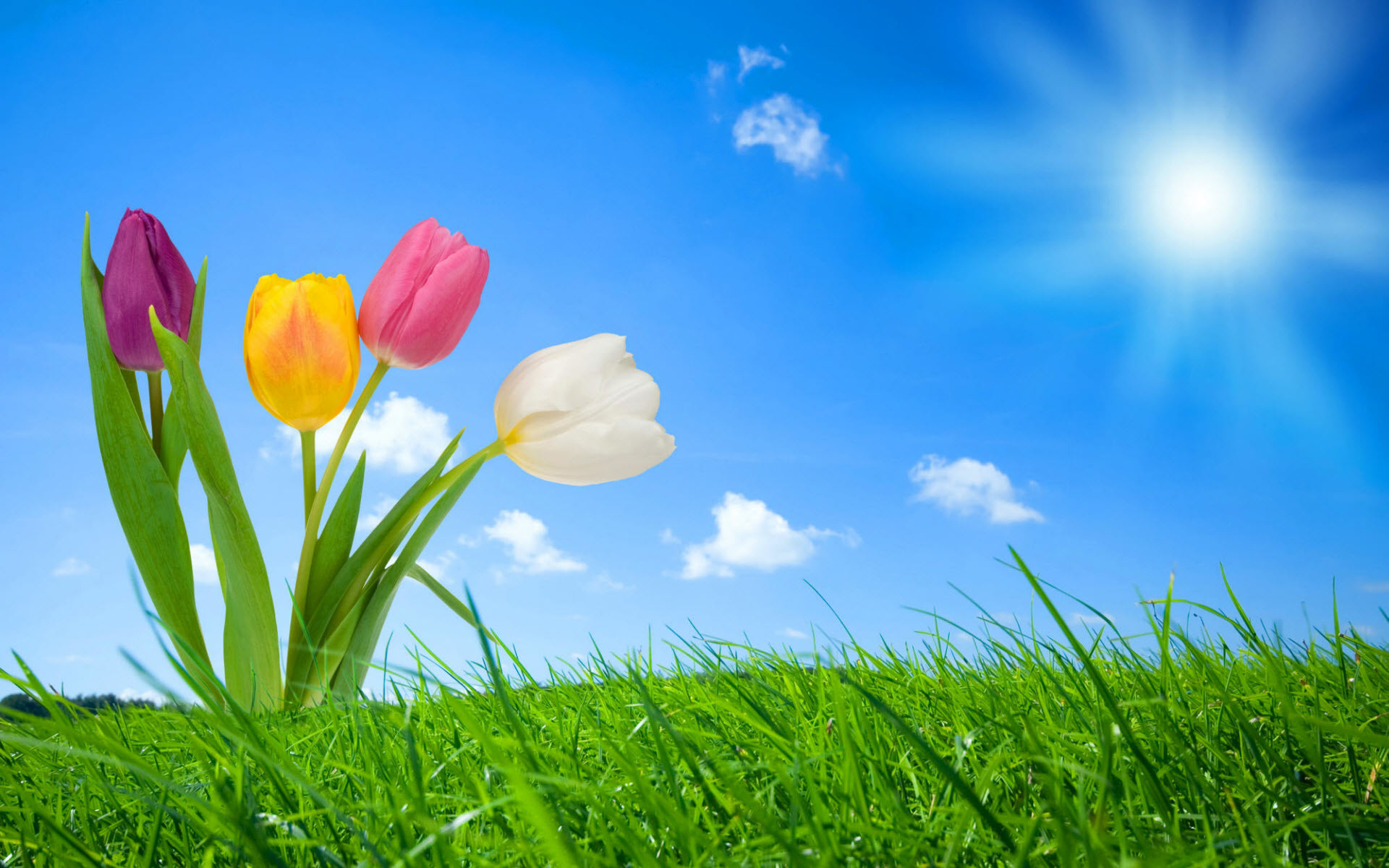 1920x1200 Free Spring Wallpaper Backgrounds | 2012 Nature Wallpapers. All images are  copyrighted by their .