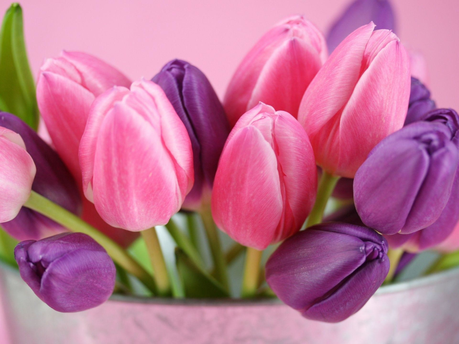 1920x1440 Pink Tulips HD Wallpaper