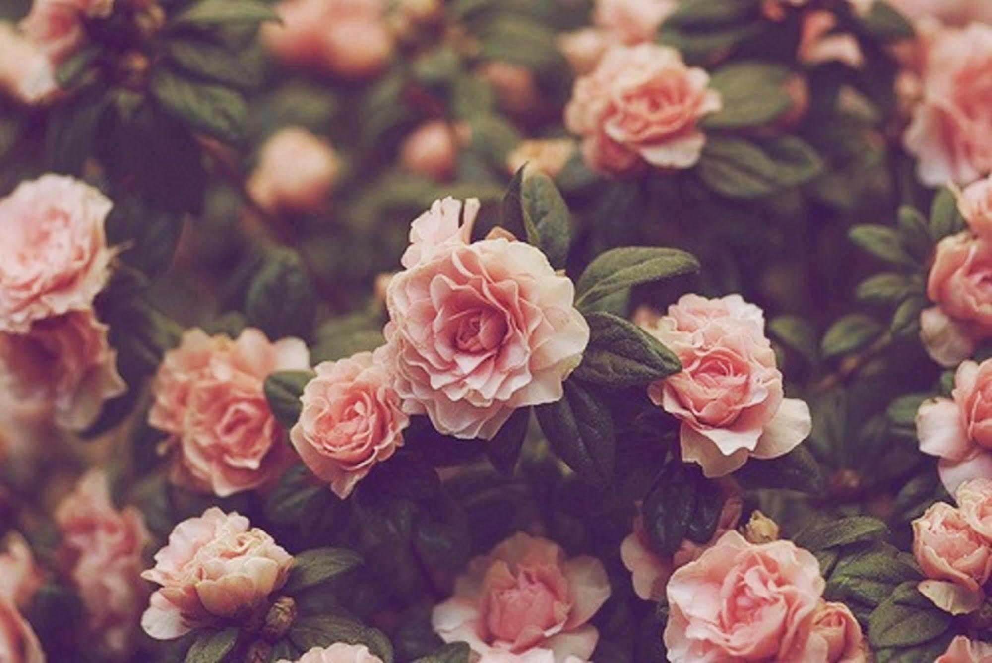 2000x1336 Vintage Flower Picture