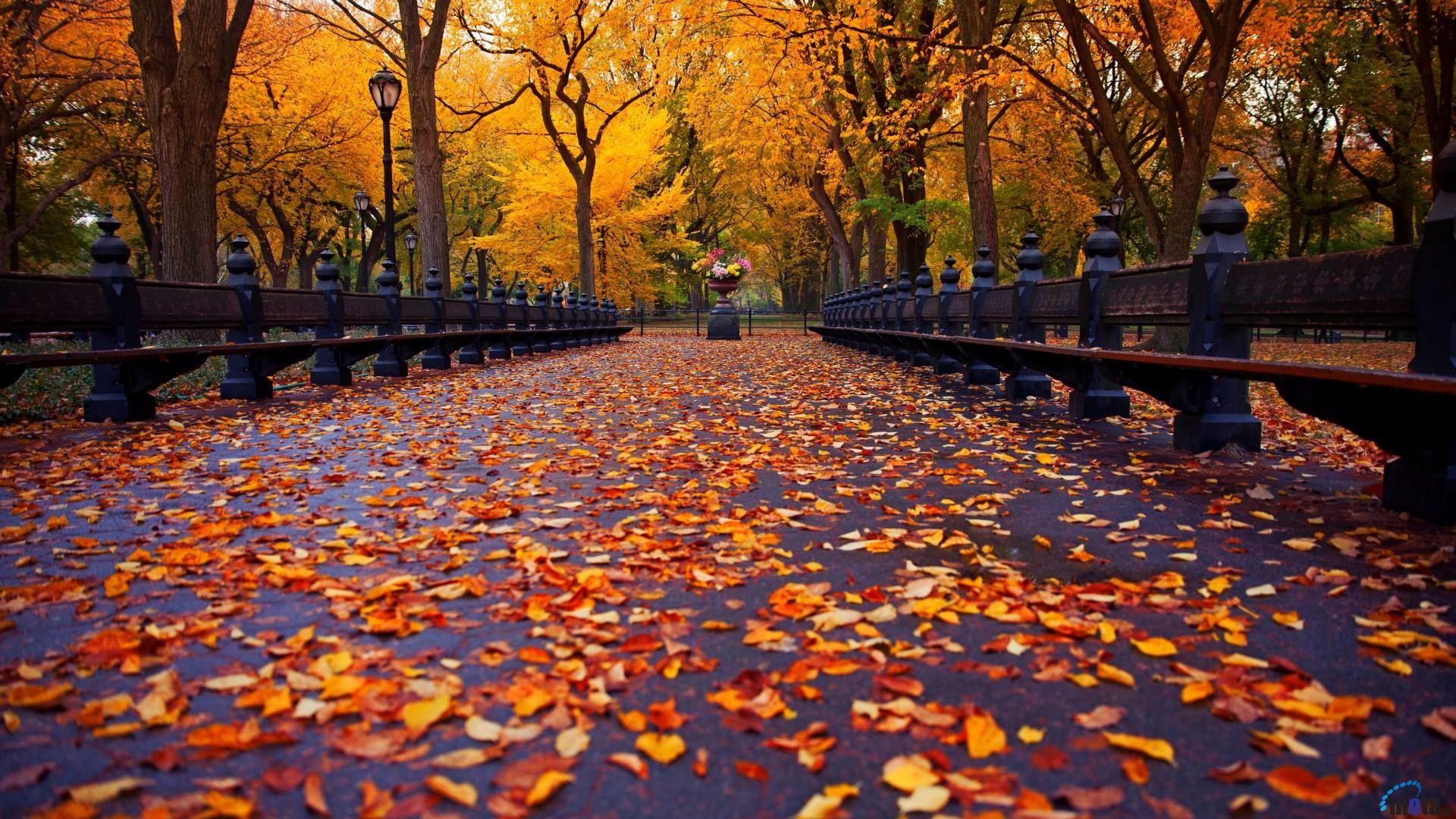 1920x1080 Wallpaper Autumn alley in the park (New York) (1920 x 1080 HDTV 1080p .