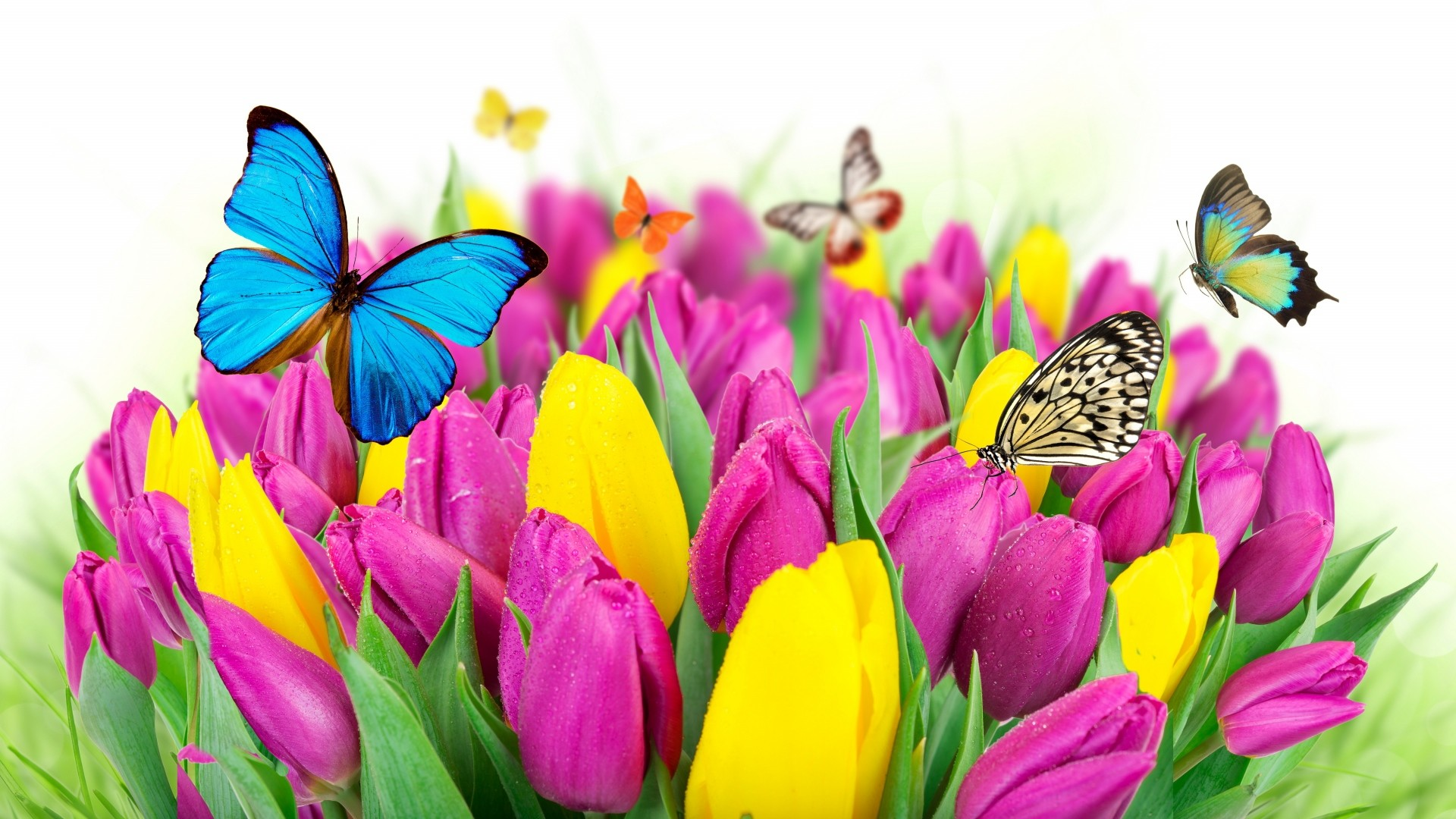 1920x1080 Preview wallpaper tulips, flowers, butterflies, colorful