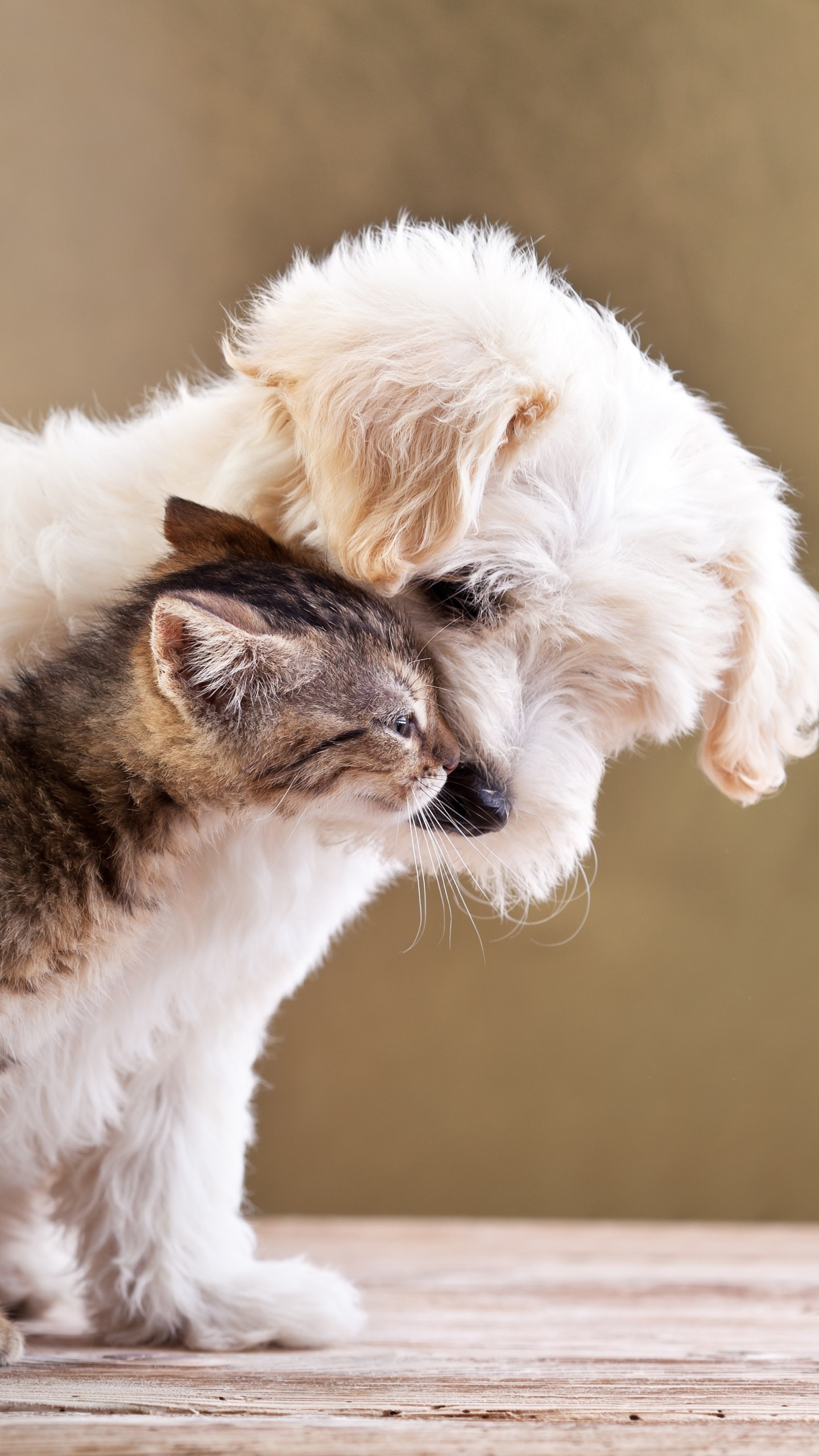 Cute puppy and kitten wallpapers 58 images - Kitten backgrounds ...
