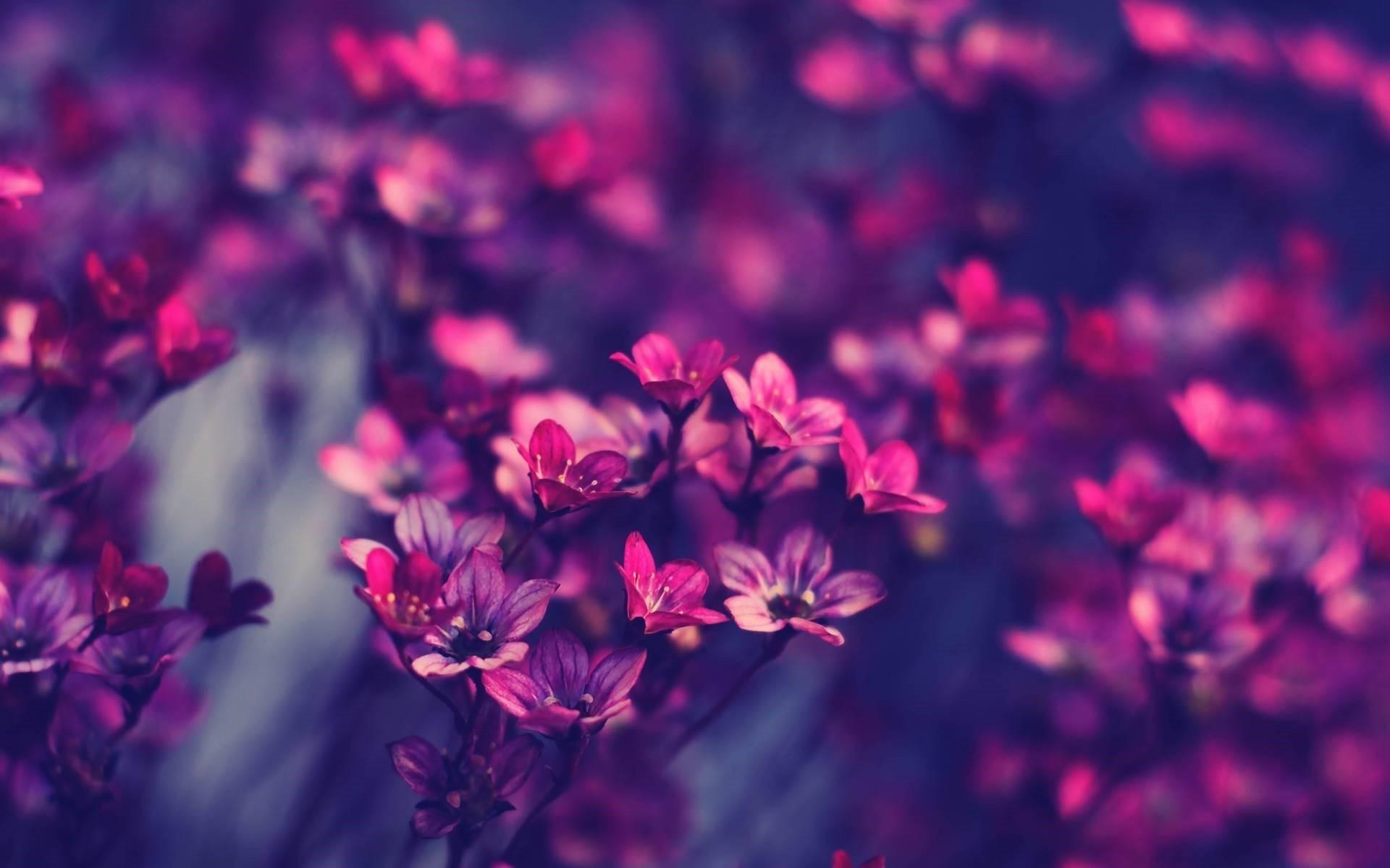 1920x1200 Pretty Wallpapers HD Tumblr