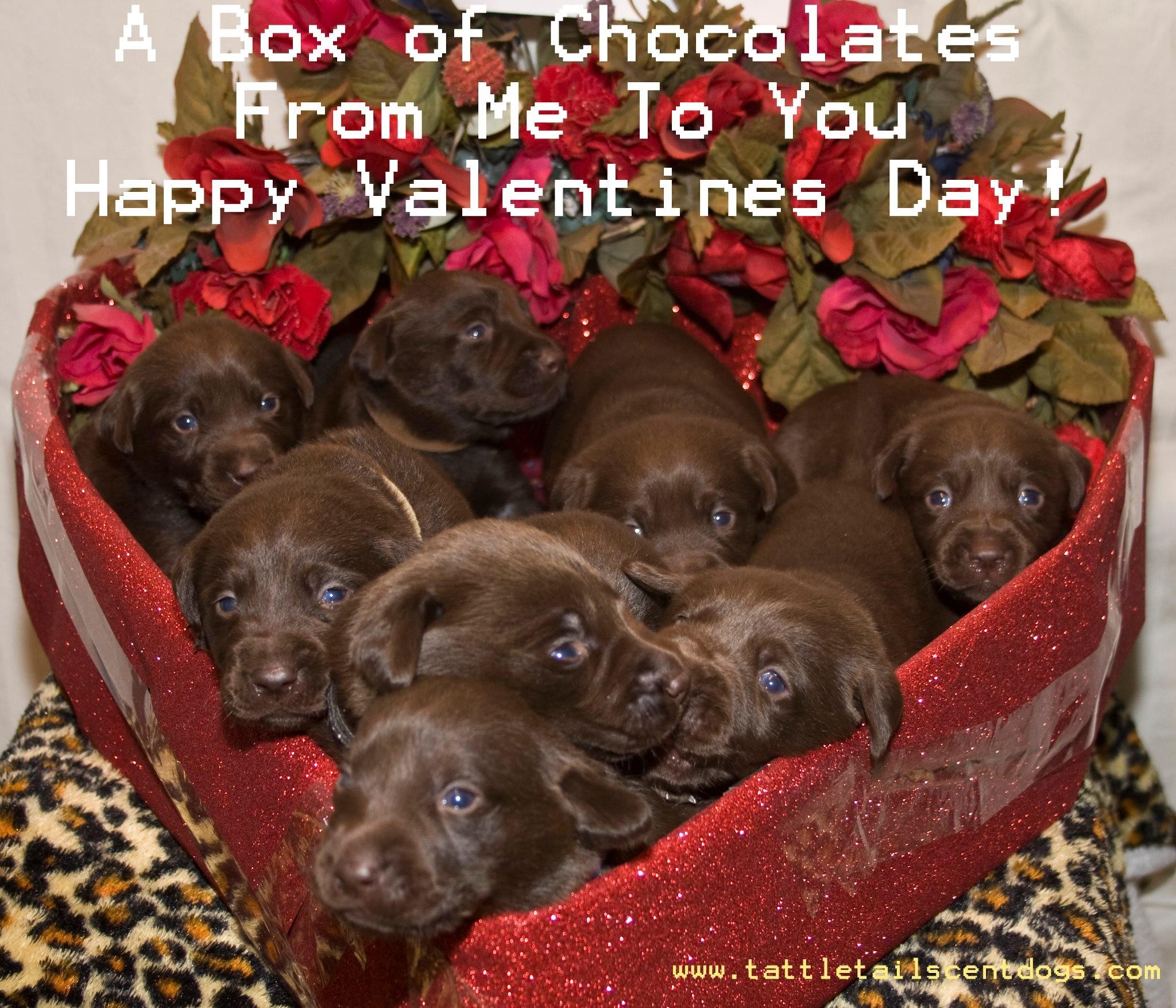 Puppy Valentine Wallpaper 56 Images