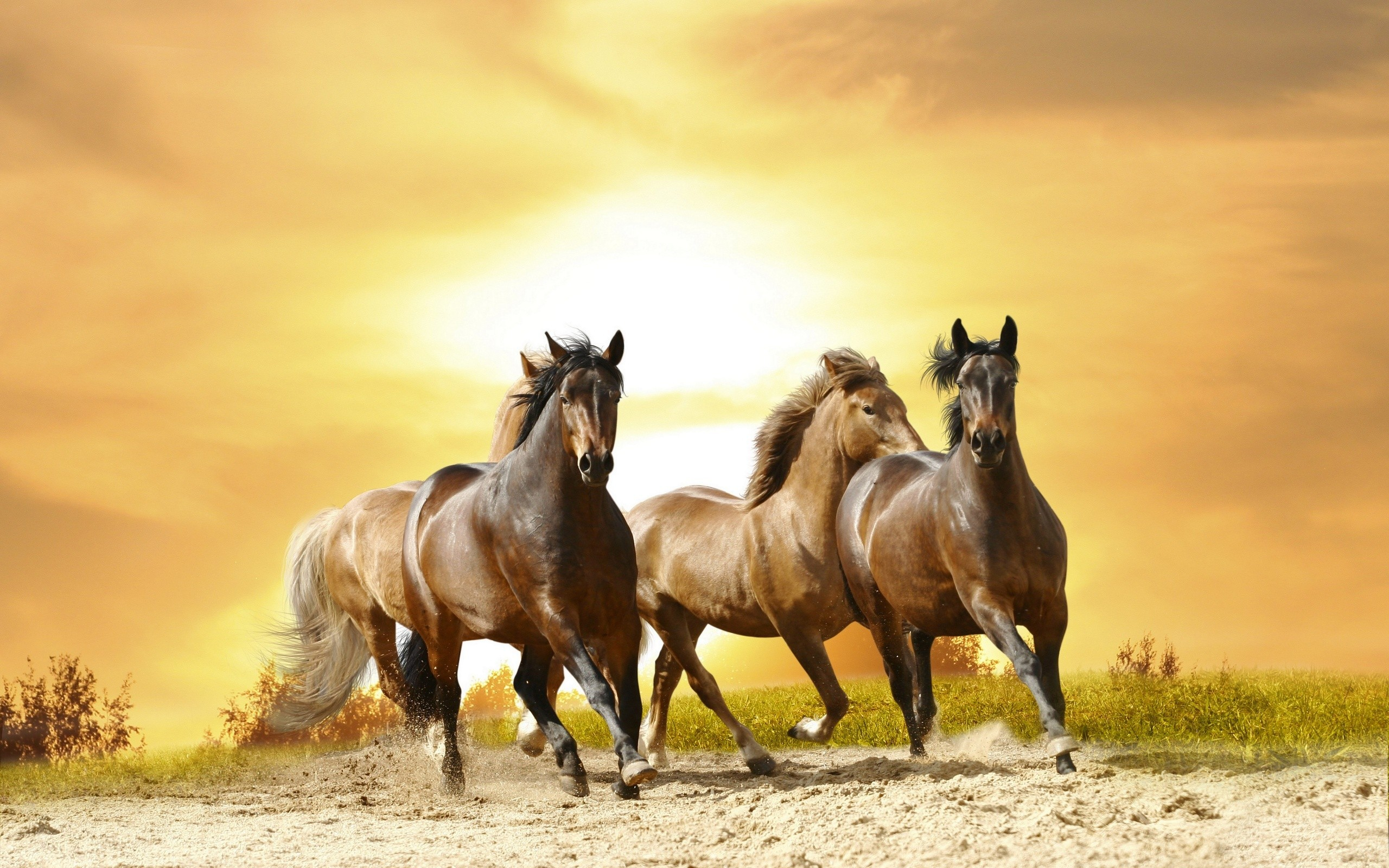 2560x1600 Horses: Horse Animals Stallion Wild Cool Wallpapers for HD 16:9 .