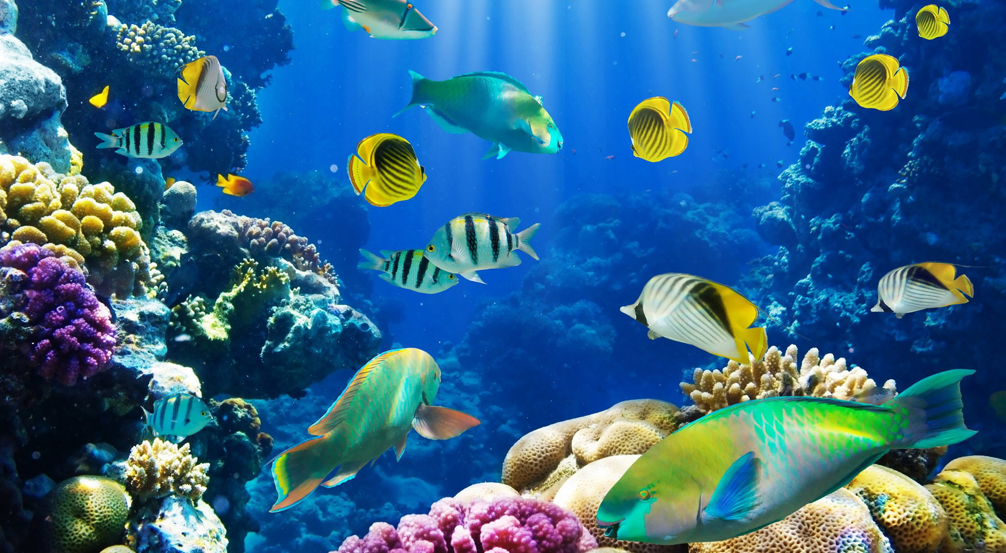 Wallpaper Of Fish 61 Images