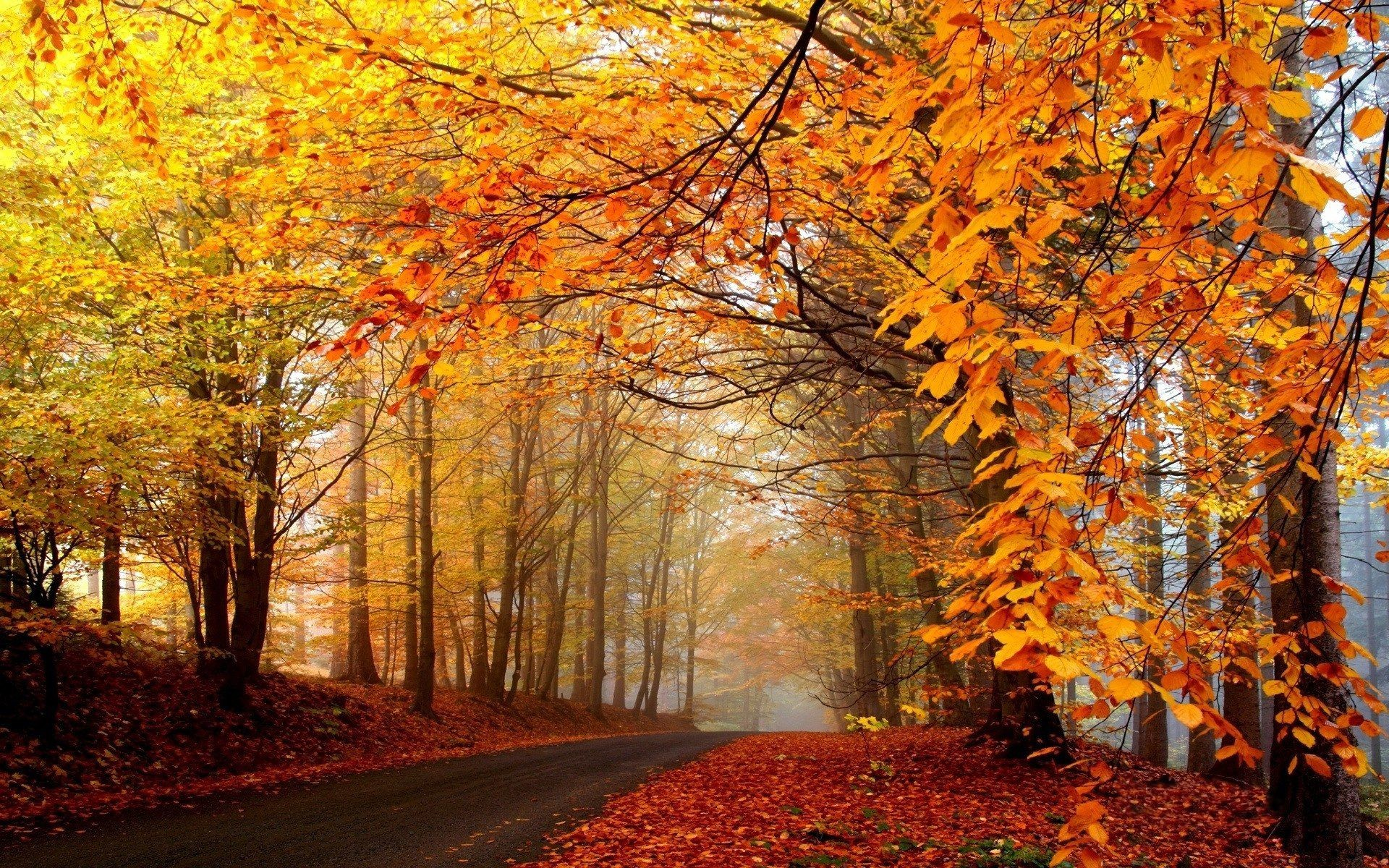 Autumn Scenery Wallpaper (57+ images)