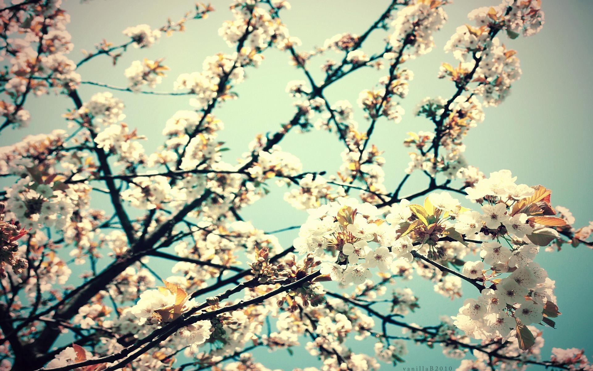 Hipster Flower Backgrounds (51+ images)
