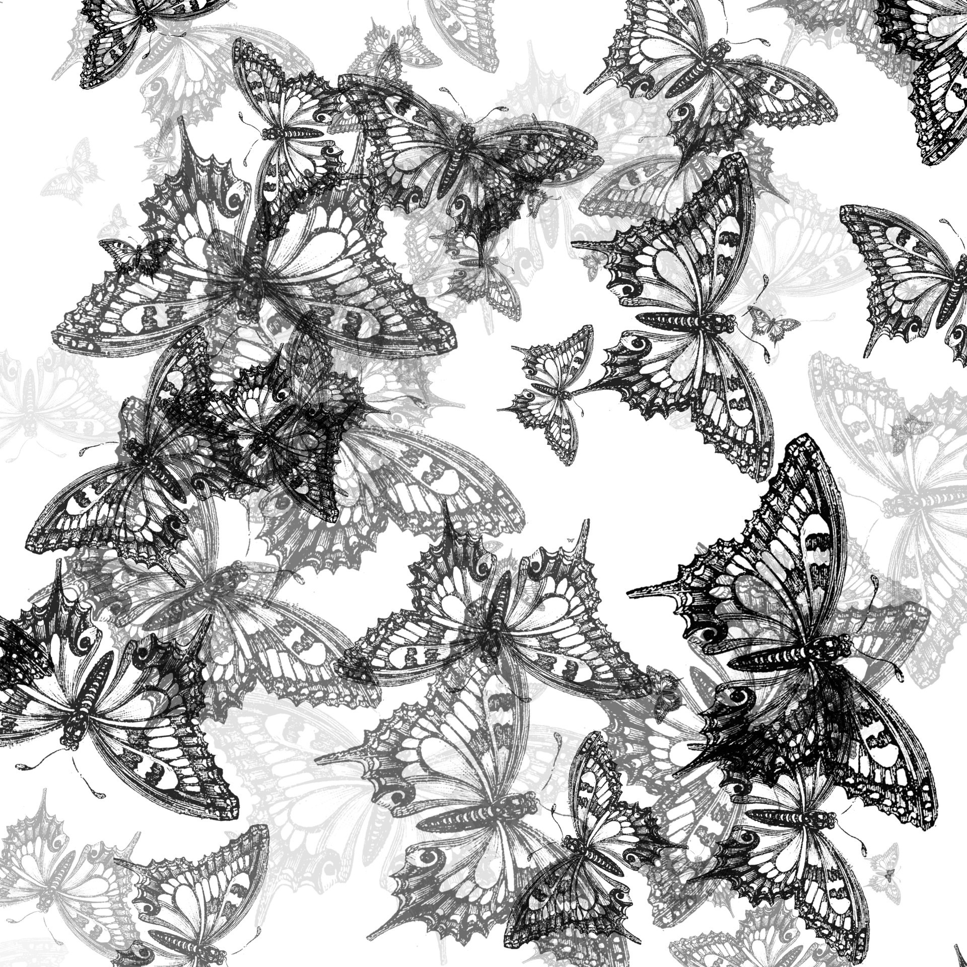 Black Butterfly Background 59 Images
