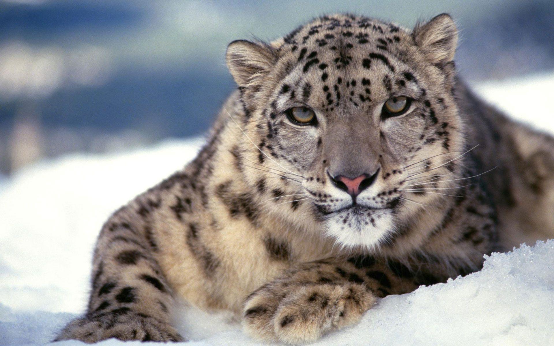 1920x1080 Wallpapers Os X Snow Leopard Horizon Resolution