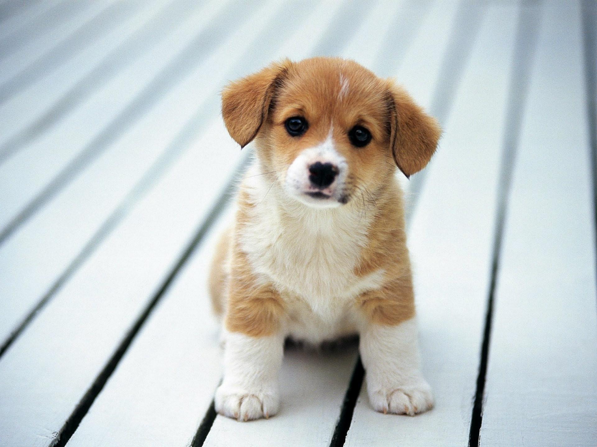 1920x1440 Cute Dog Wallpaper Mac