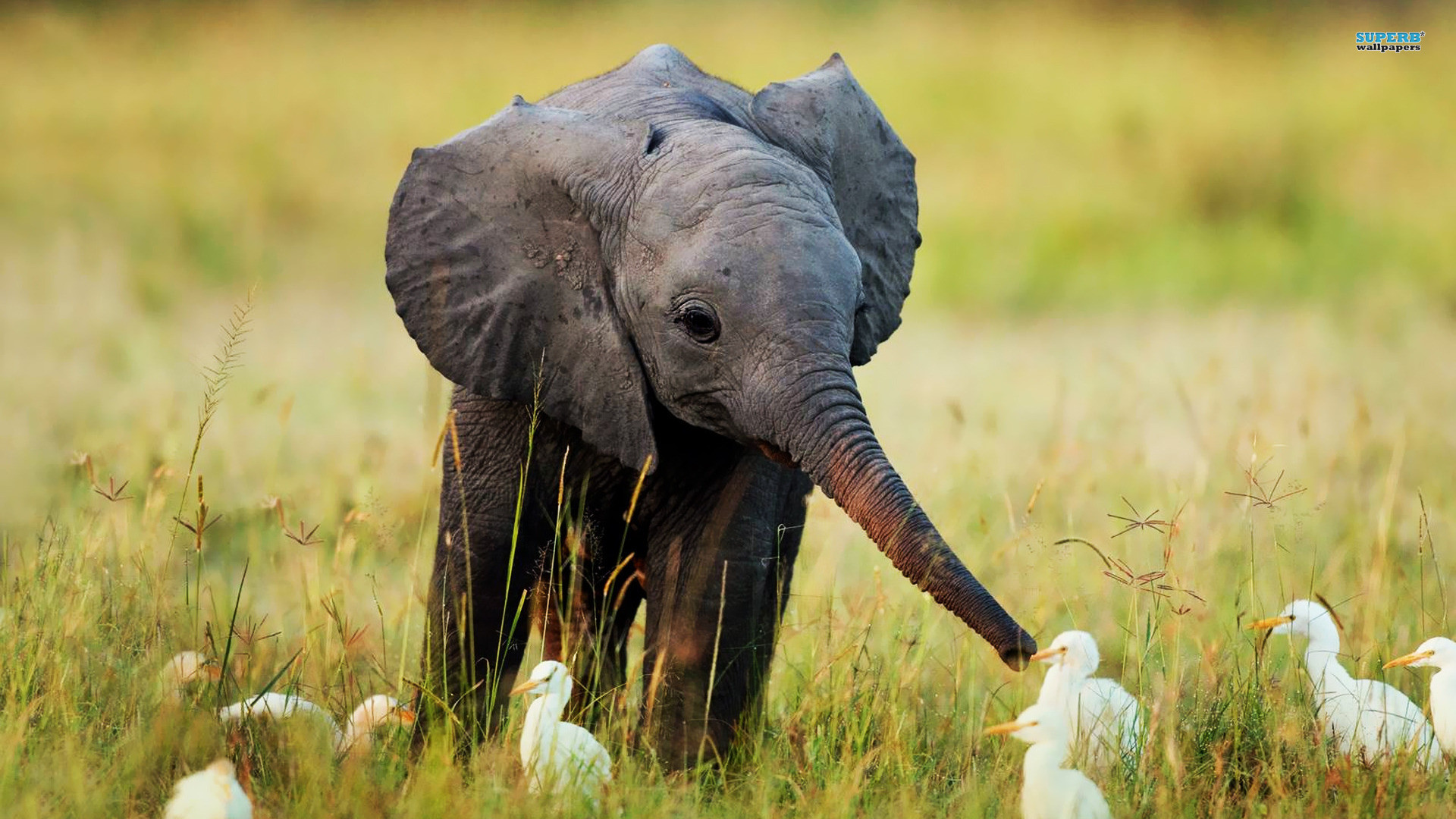 Wild Animals Wallpapers 57 Images