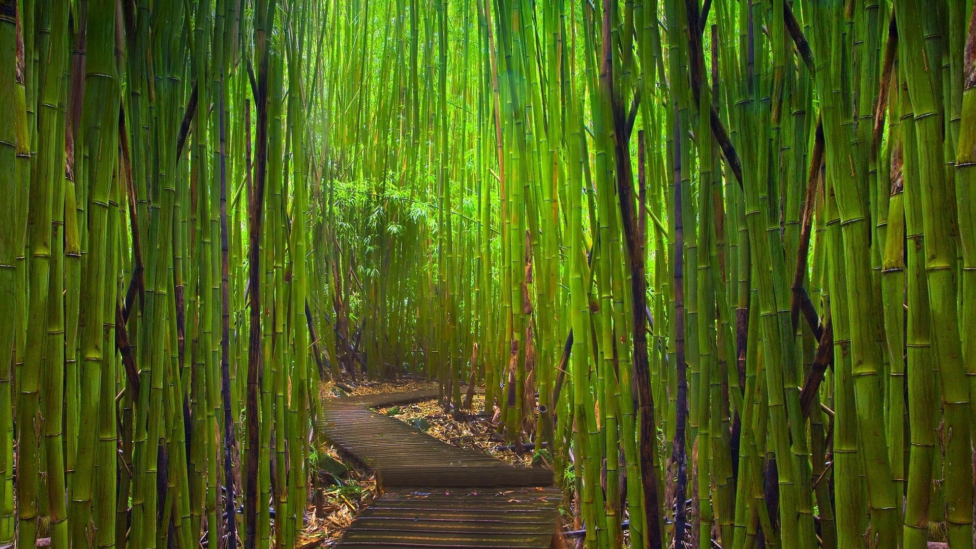 1920x1080 Preview wallpaper bamboo, thickets, path, bends, young, green