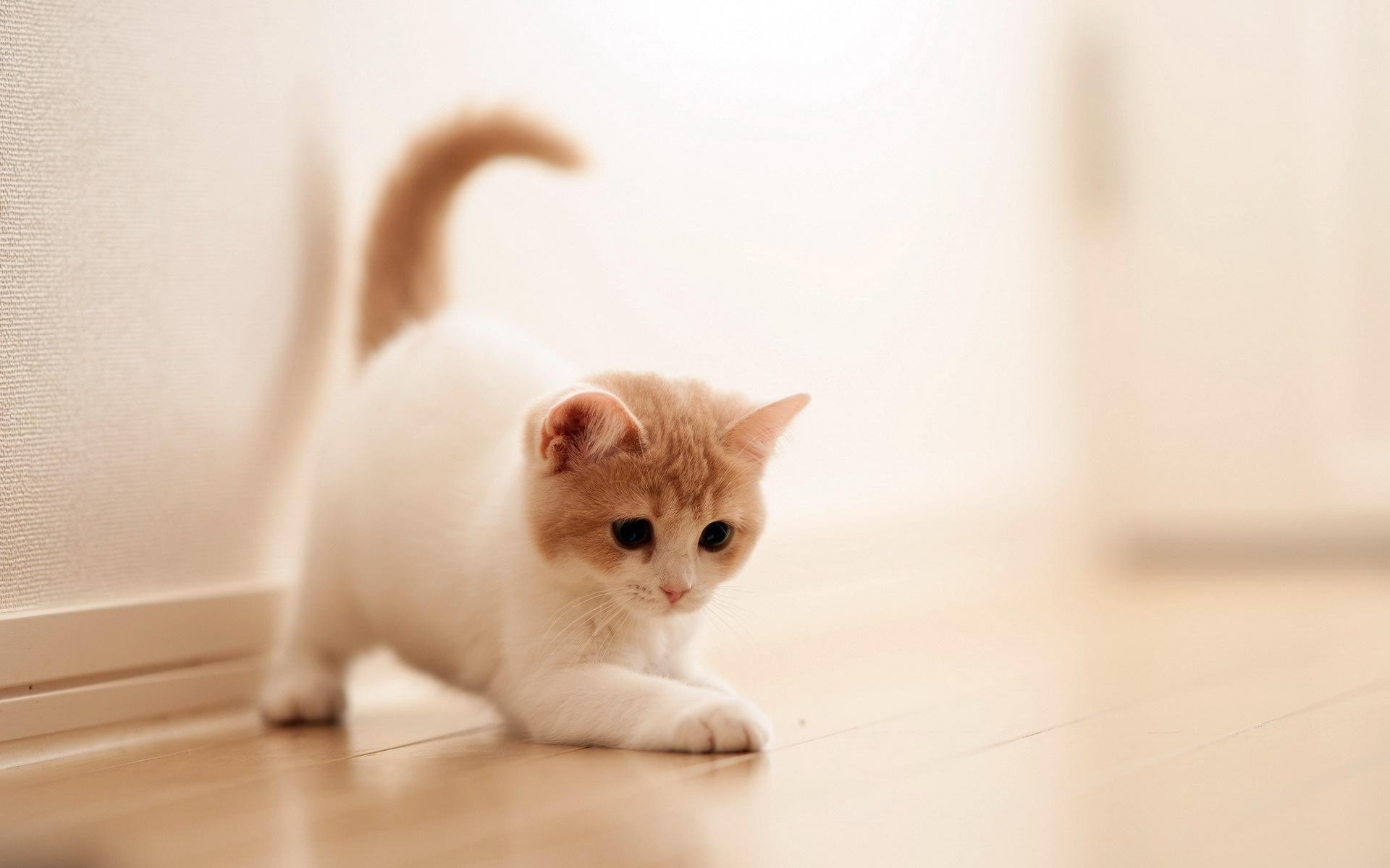 Cute cats wallpaper 63 images for Adorable wallpapers