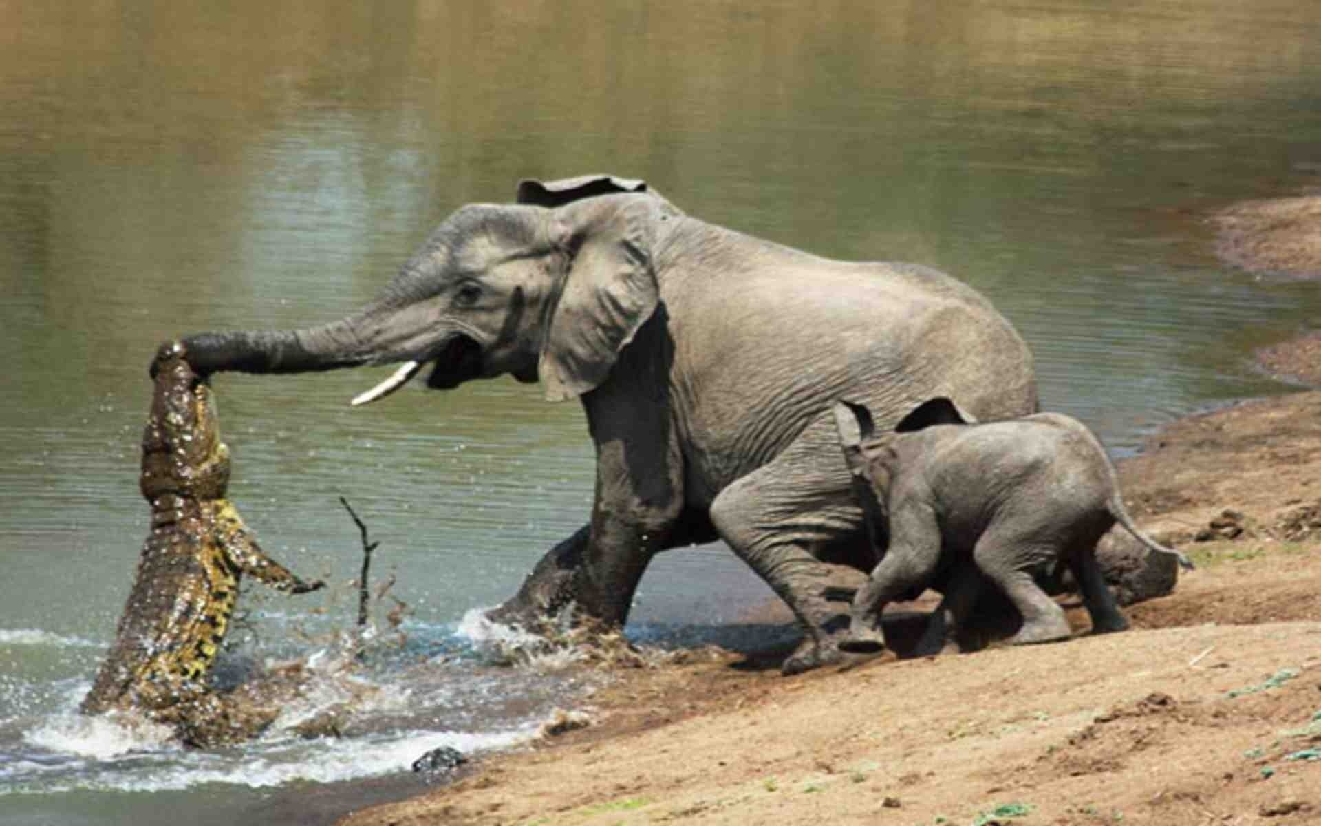 Elephant desktop wallpaper 77 images - Baby elephant wallpaper ...