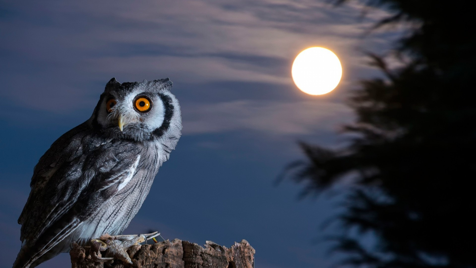 1920x1080 Night-Owl-Moon-HD-Wallpaper
