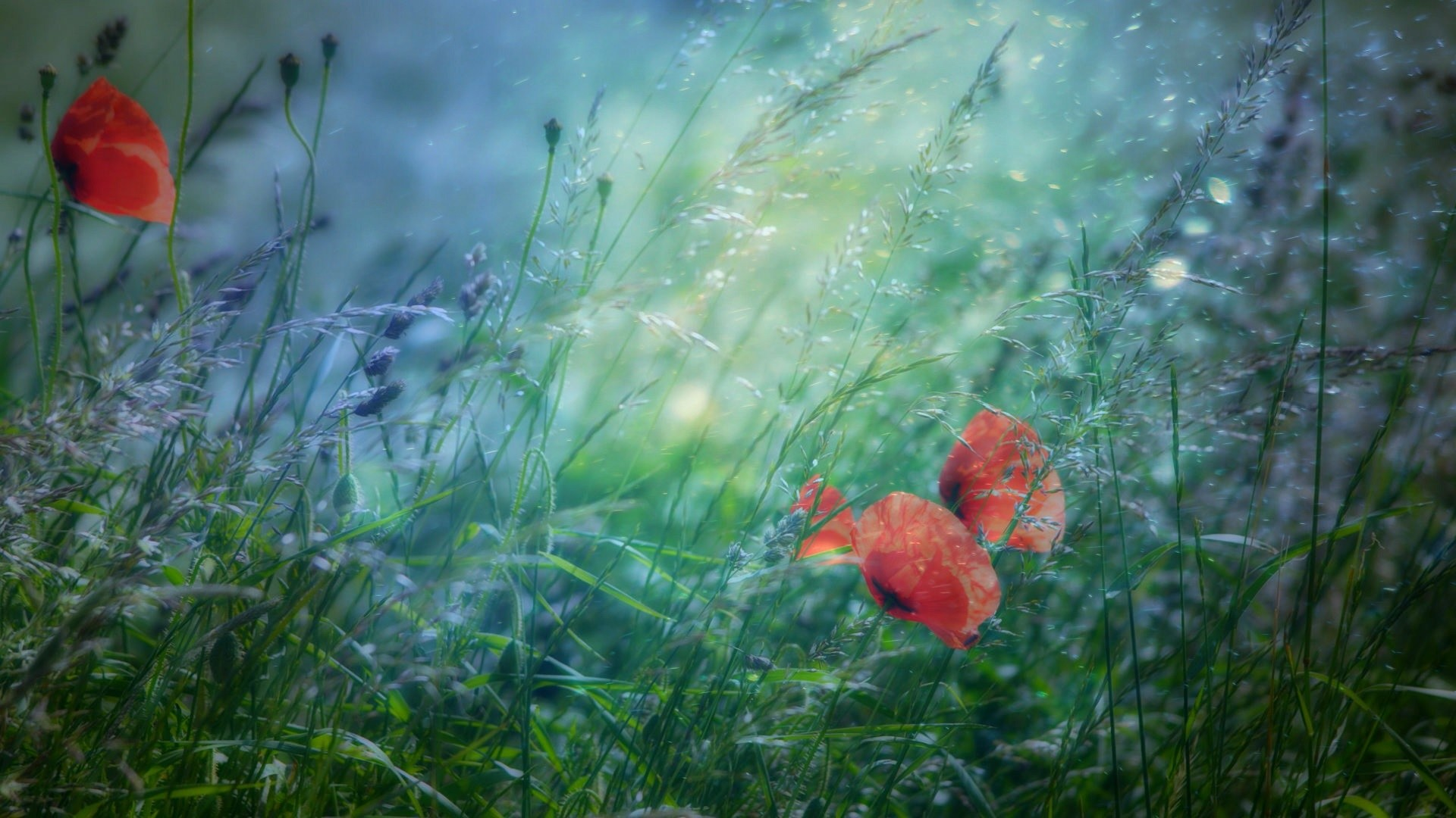 1920x1080 Small Red Flowers in Green Grass Photography.