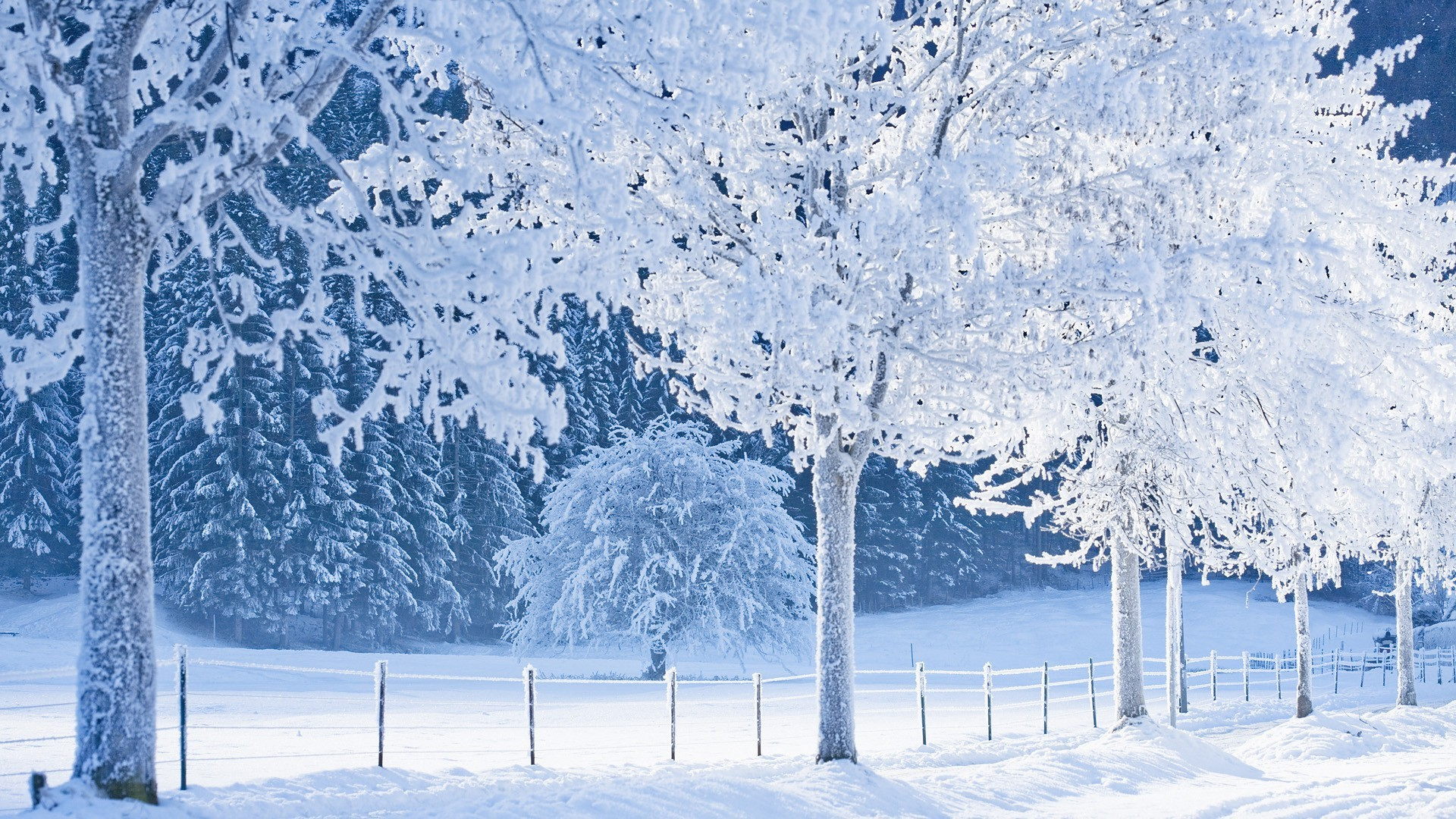1920x1080 Real Snowy Backgrounds, wallpaper, Real Snowy Backgrounds hd wallpaper .