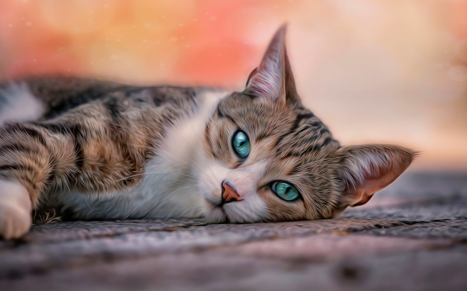 Hd cat wallpapers 64 images - Kitten wallpaper hd ...