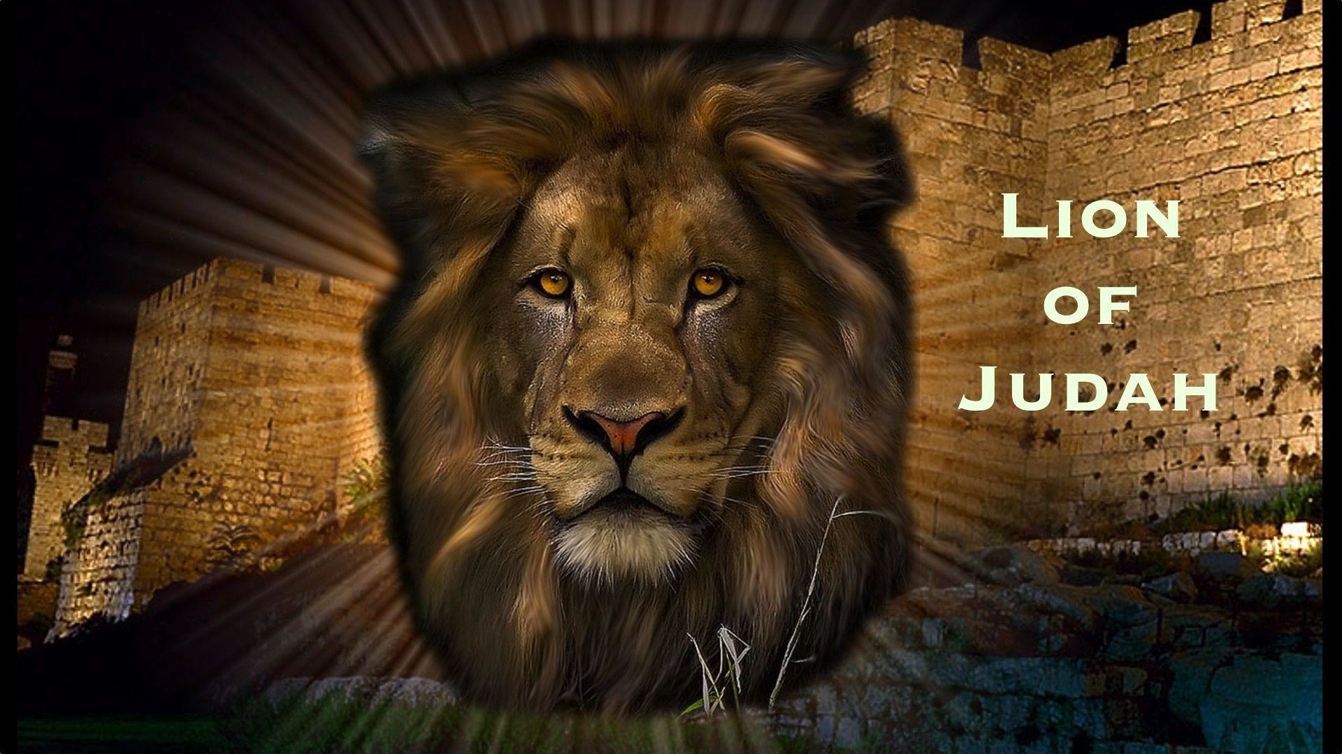Lion And Lamb Wallpaper 54 Images