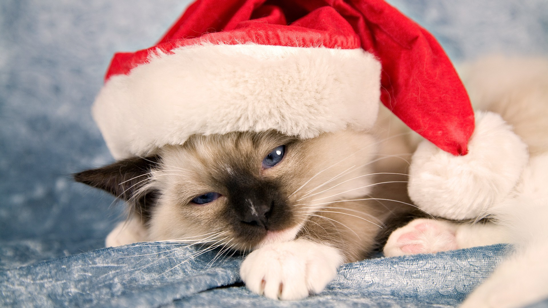 1920x1080 ... christmas kittens wallpaper wallpapersafari ...