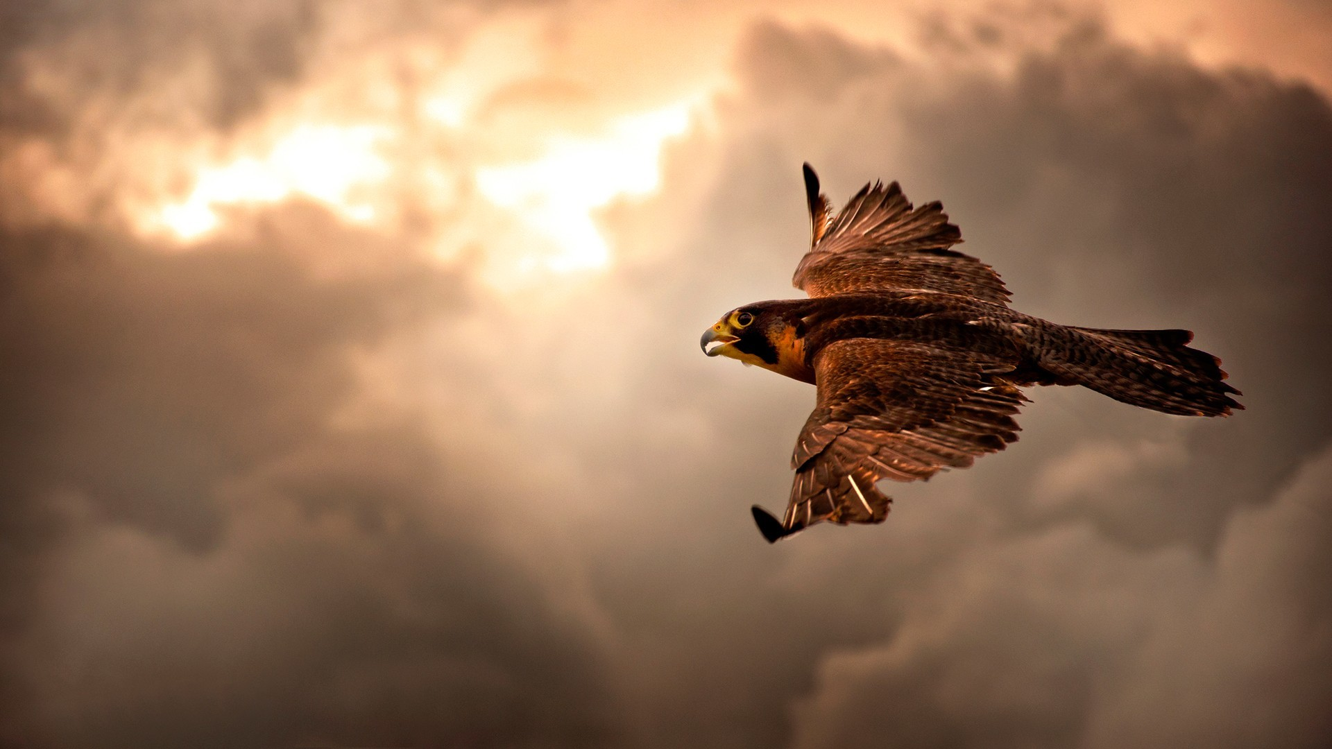 1920x1080 desktop hd eagle pics wallpaper