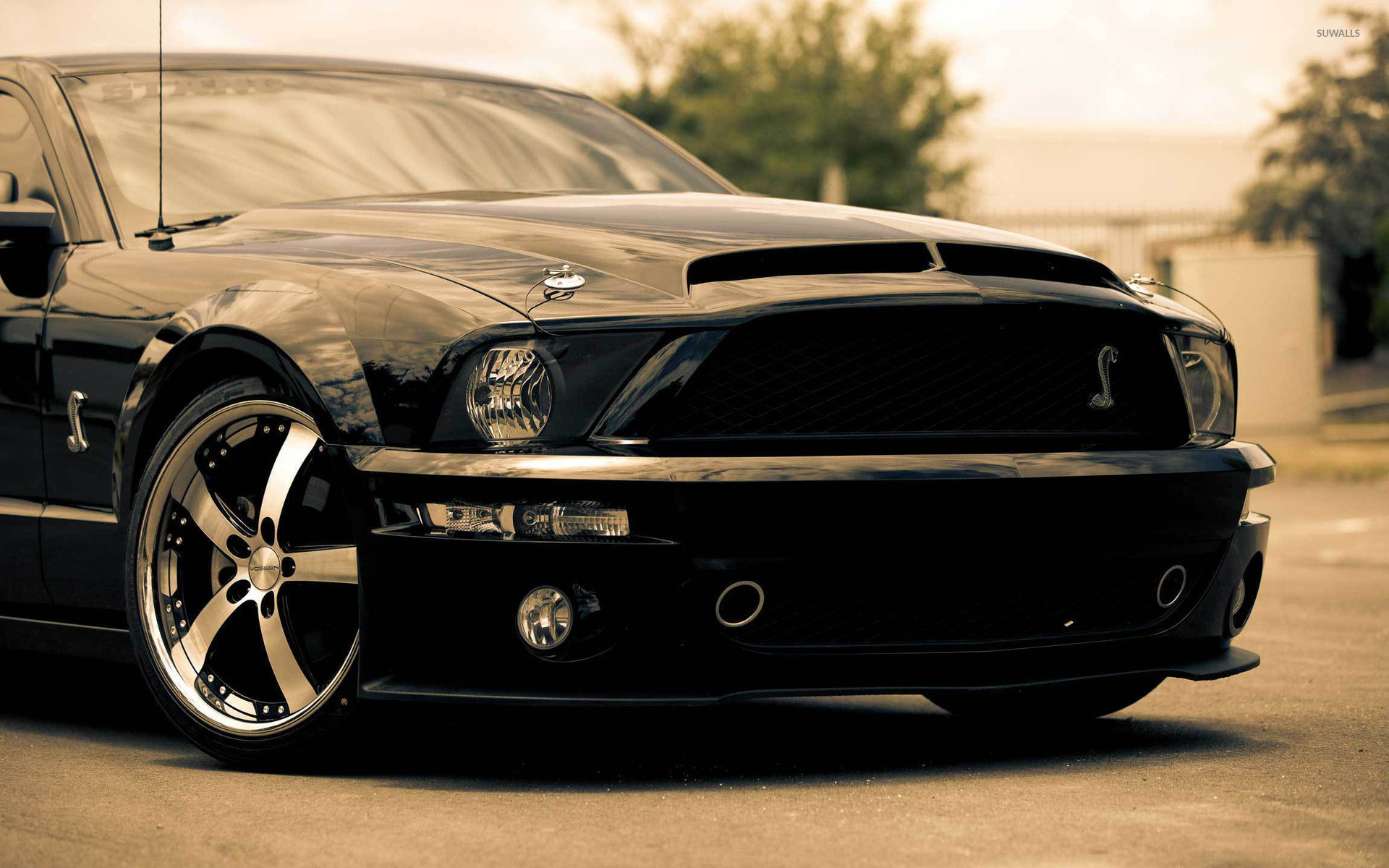 1920x1200 Shelby Mustang wallpaper  jpg