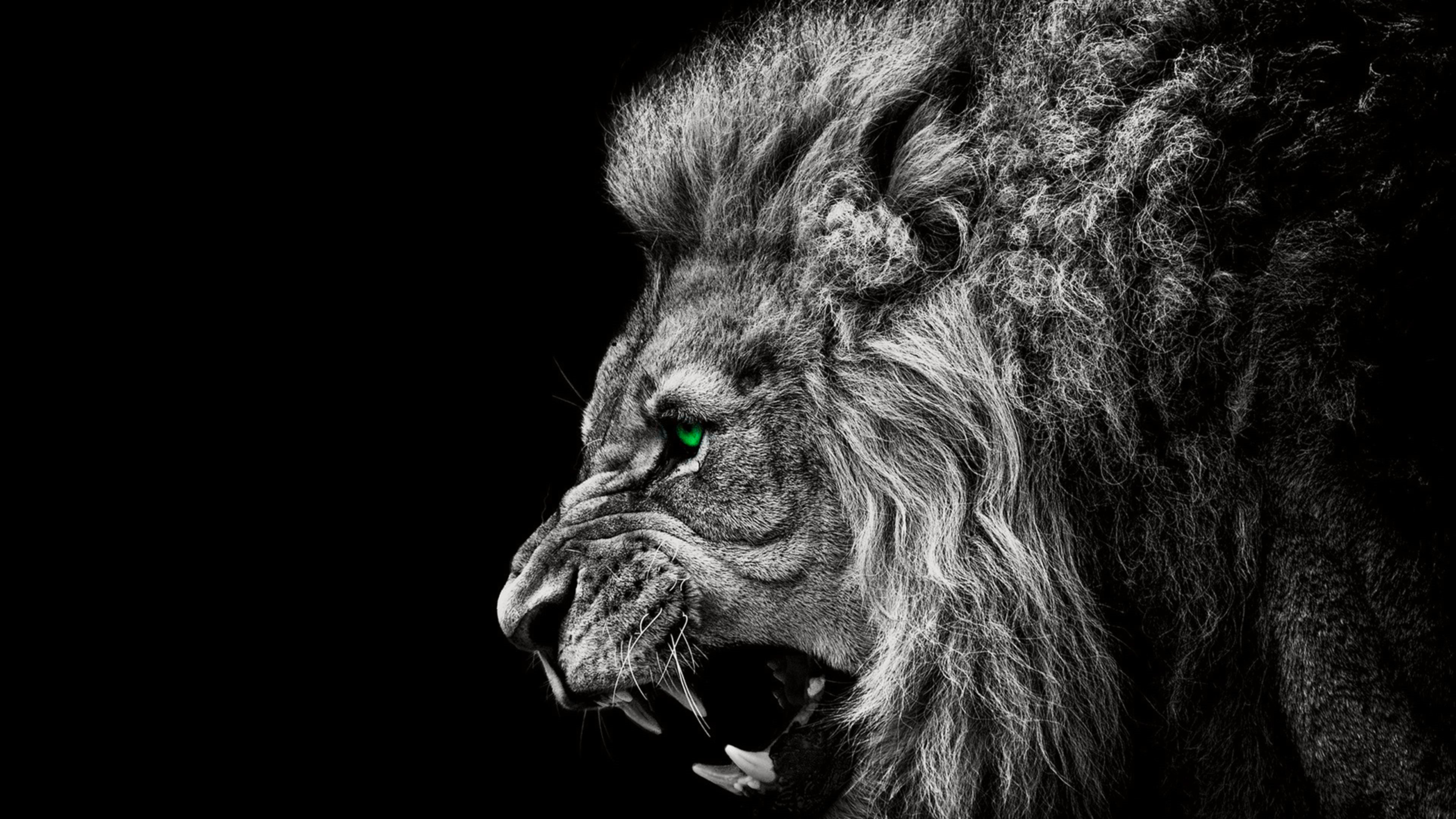 3840x2160 Explore Lion Wallpaper, Roaring Lion, and more!