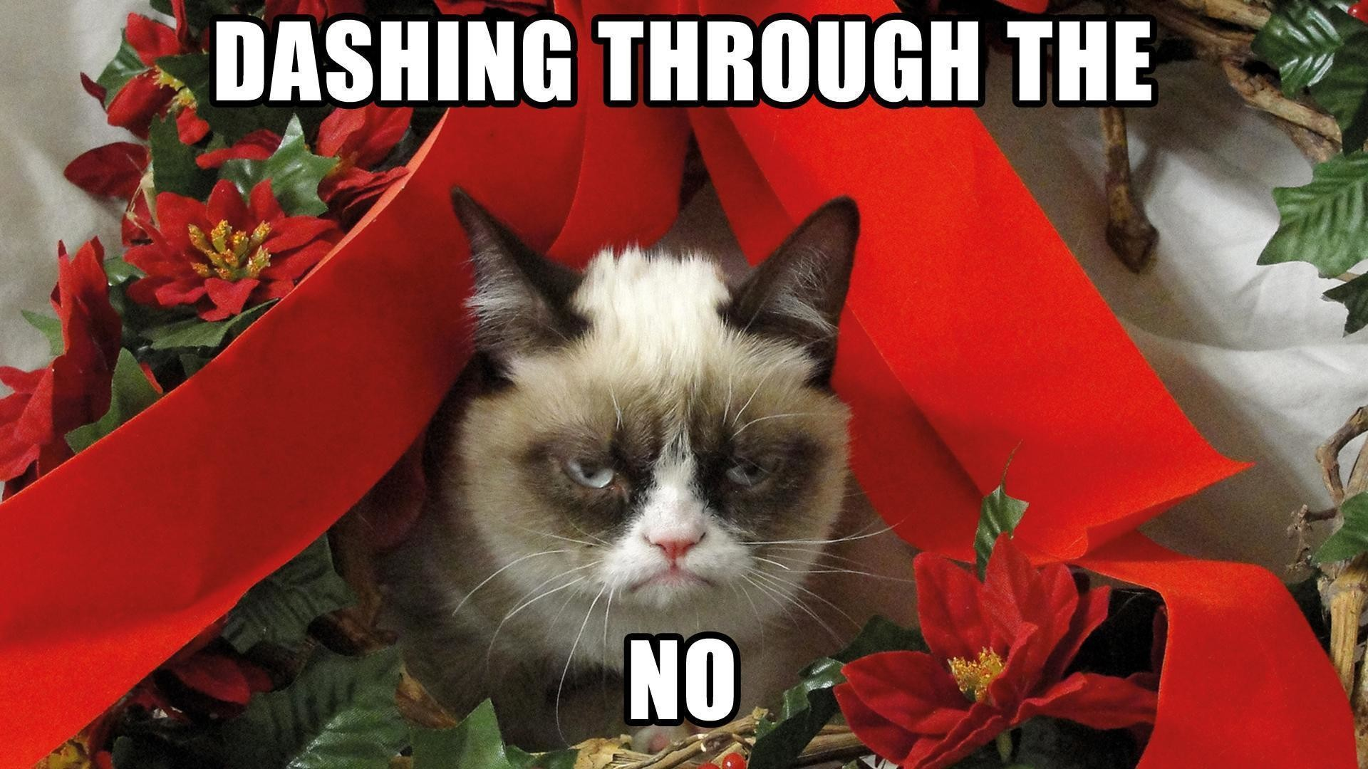 1920x1080 48 best images about <b>Grumpy</b>♥<b>