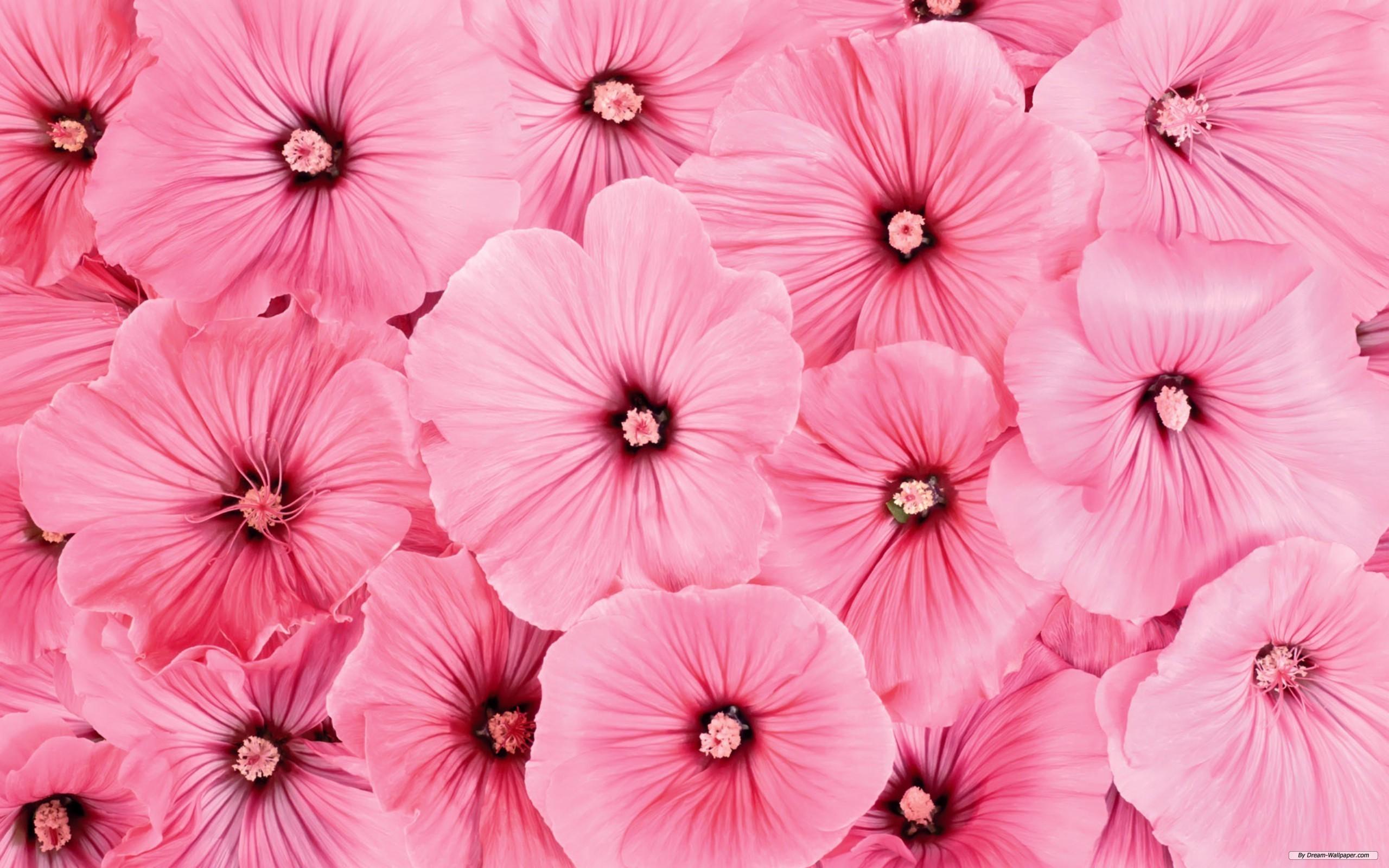 Pink hd wallpaper 81 images 1920x1200 pink flowers hd wallpapers free wallpaper mightylinksfo