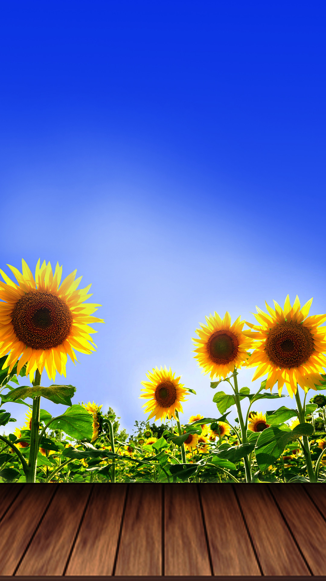 2560x1440 HD Wallpaper With Sunflower In A Field