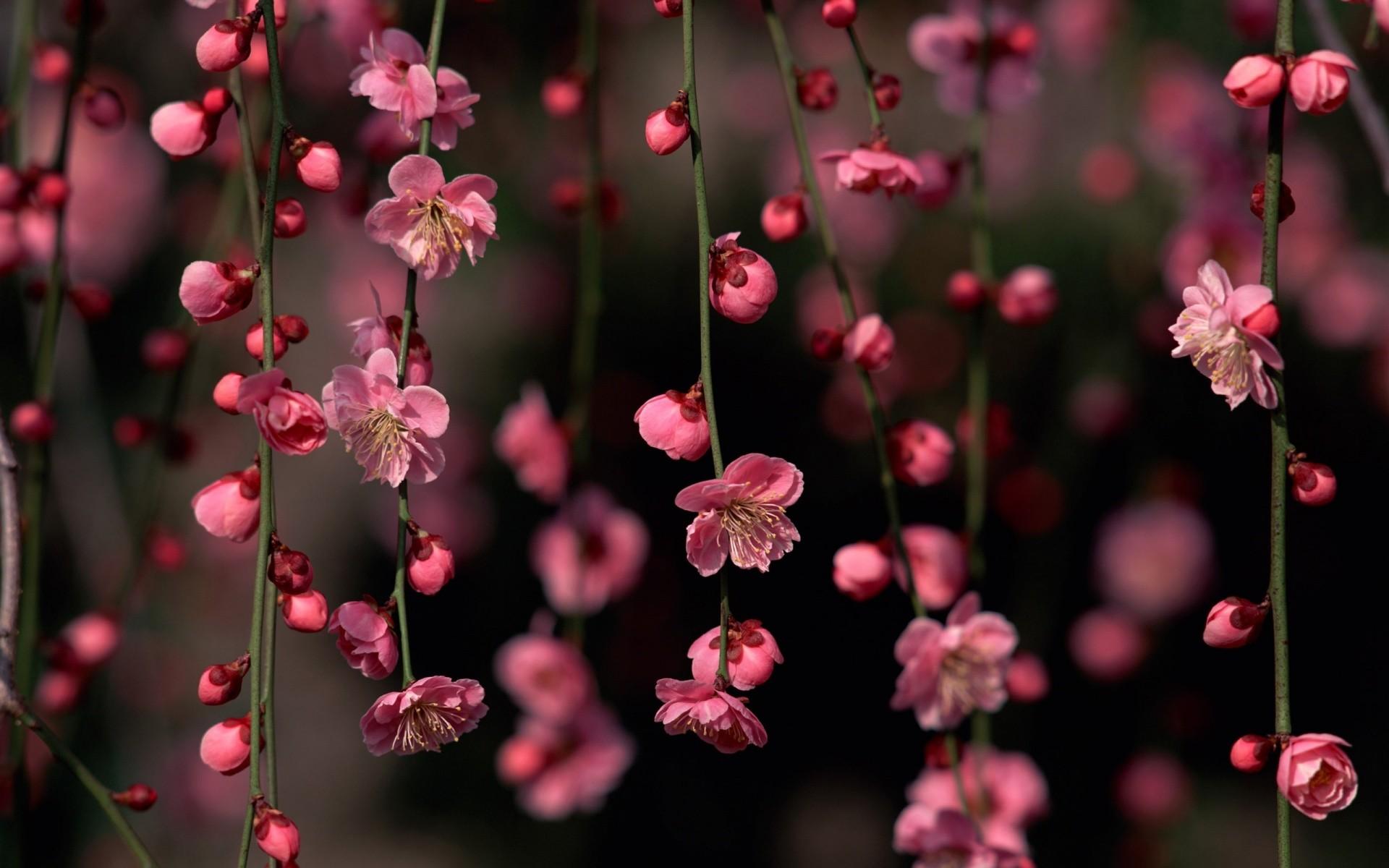 Pretty Spring Flowers Wallpaper (68+
