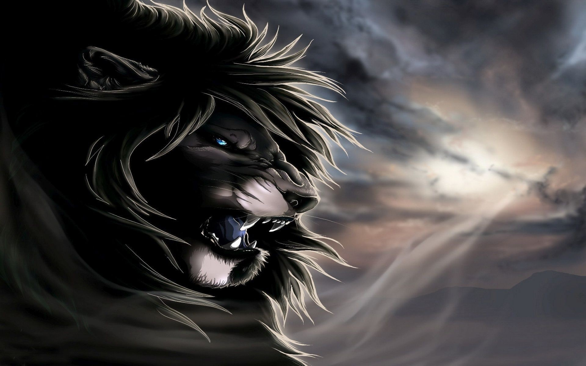 Black And White Lion Wallpaper 51 Images