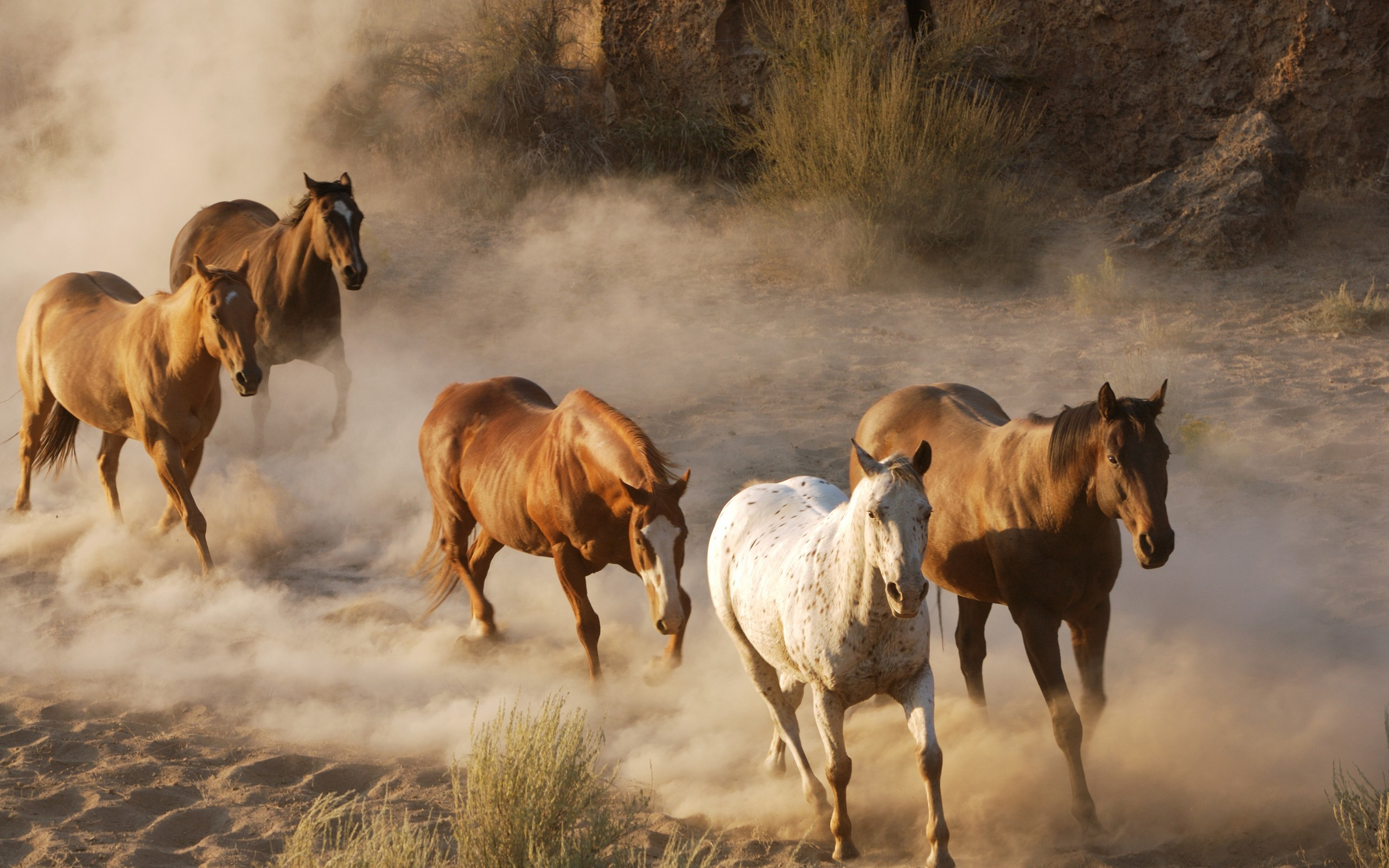 2560x1600 Wild Horses Running Free | Free Download Running Horse Wallpaper Wallpapers  Free