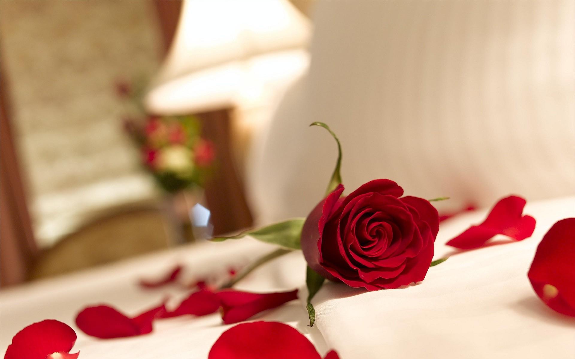 Red rose love wallpaper 55 images - Y k love wallpaper ...