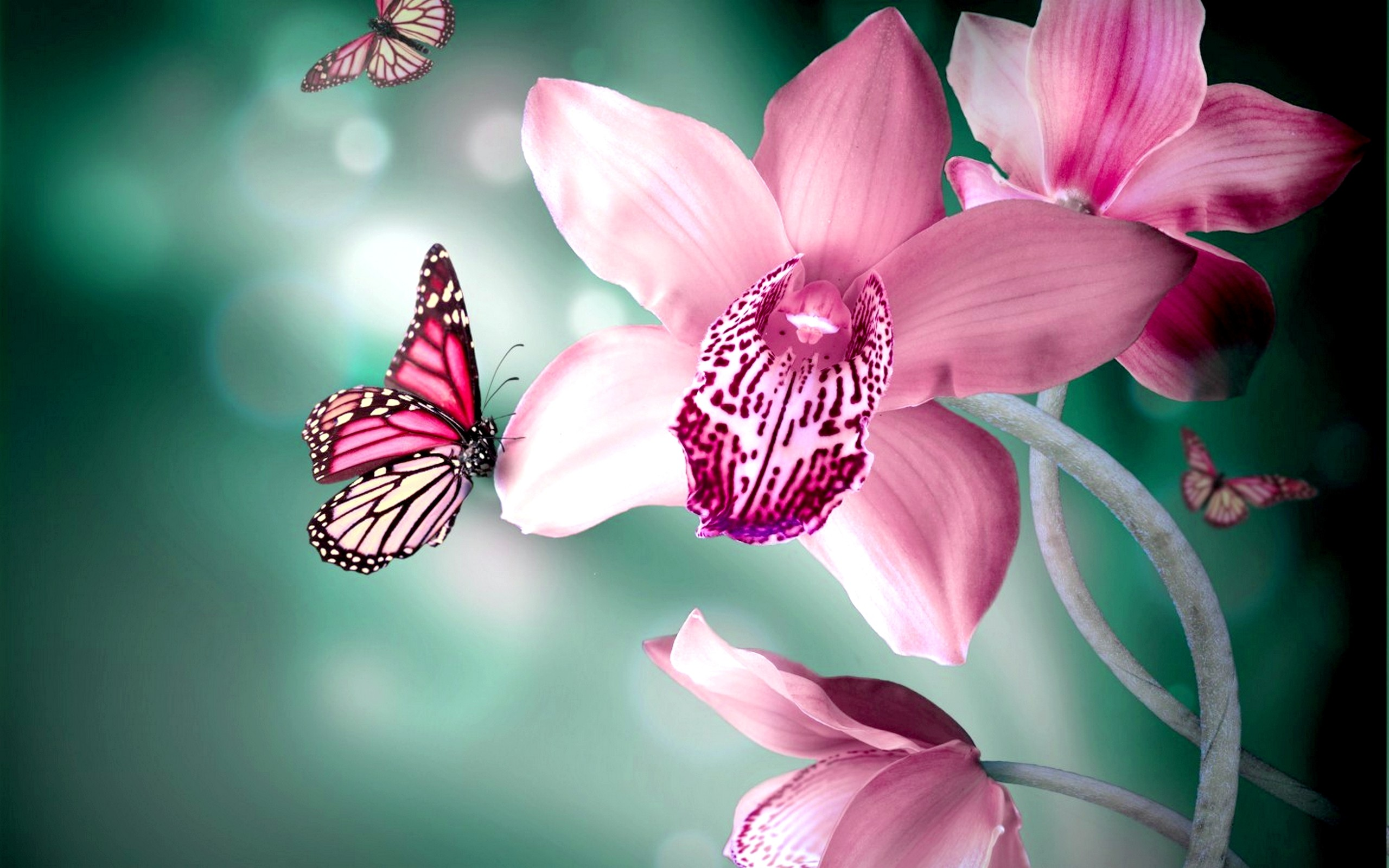 2560x1600 Butterflies Flower - HD Animal Wallpapers - Butterflies Flower