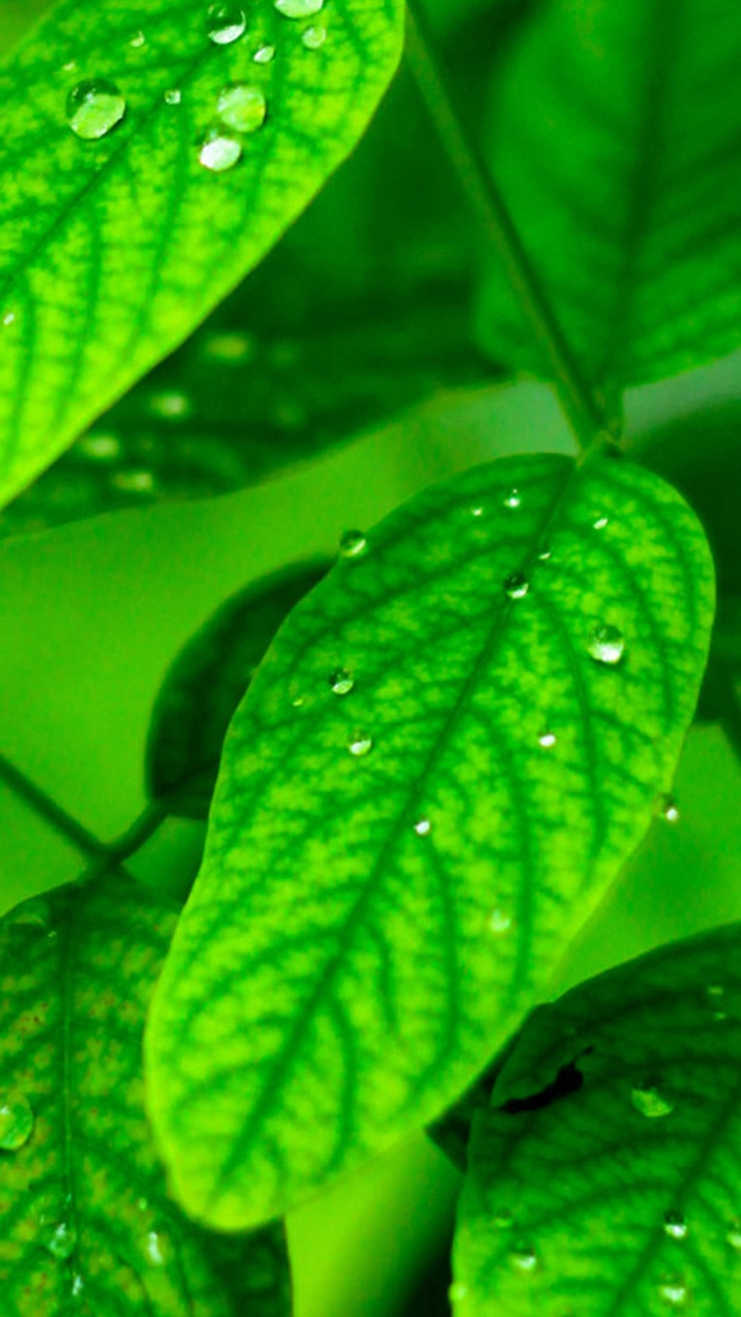 Green Leaf Wallpaper Hd 70 Images