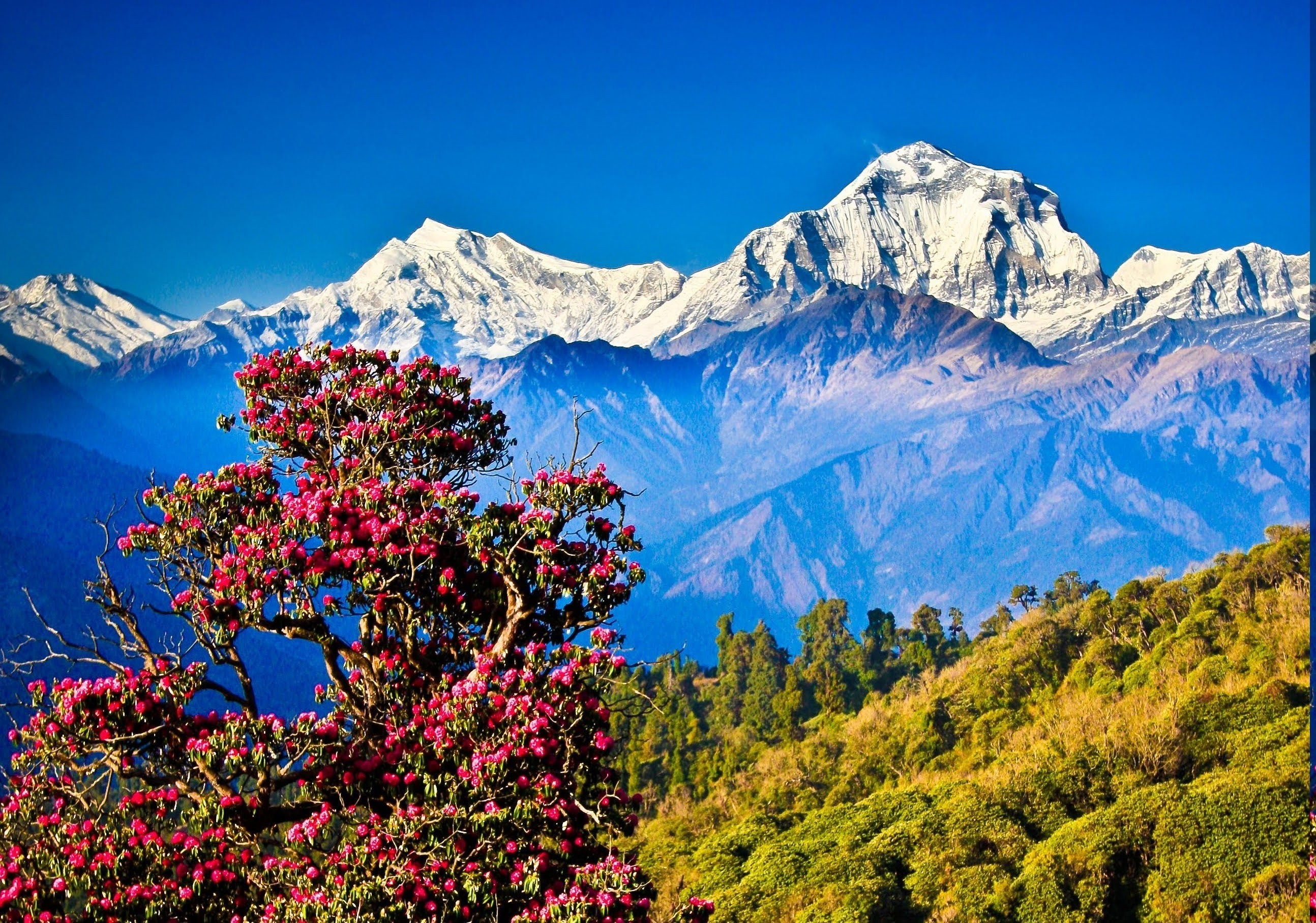 background of nepal Shamser thapa is a teacher and principle of a school in the small picturesque  village of gaunshahar, nepal the village being the original abode of the nepali .