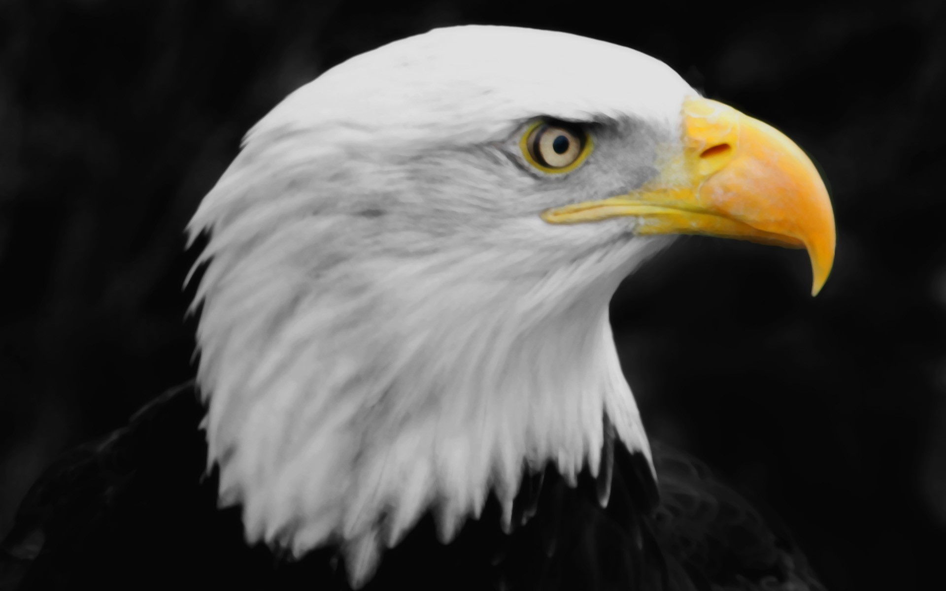 1920x1200 eagle hd wallpaper download 0007