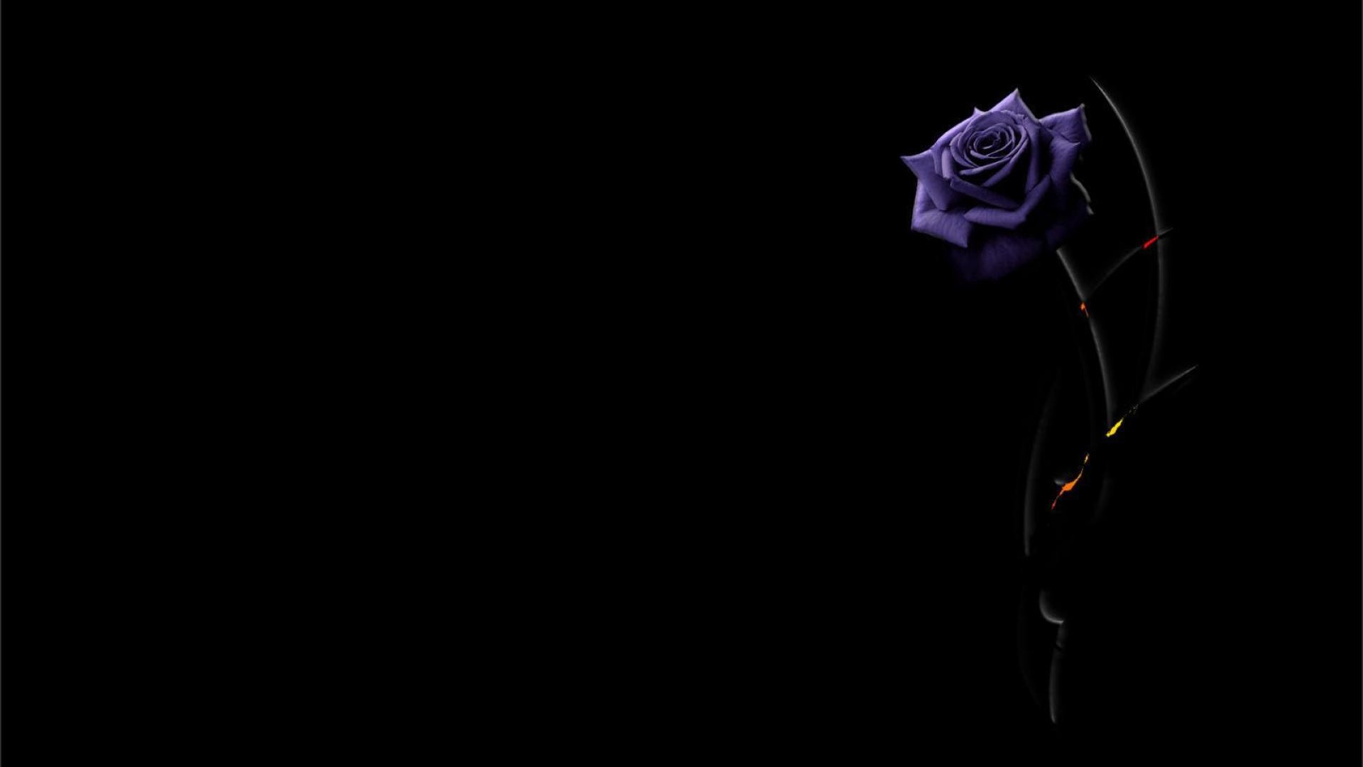 1920x1080 Beautiful purple rose on a black background