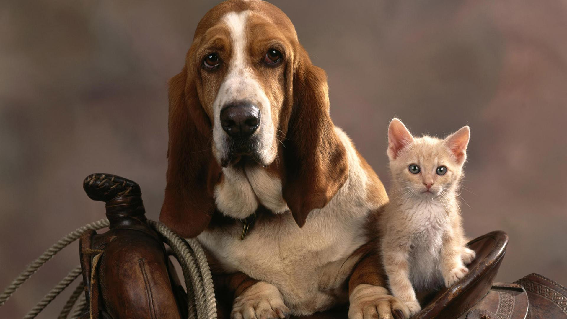 1920x1080 Wallpaper Dog Cat Couple Friends Care