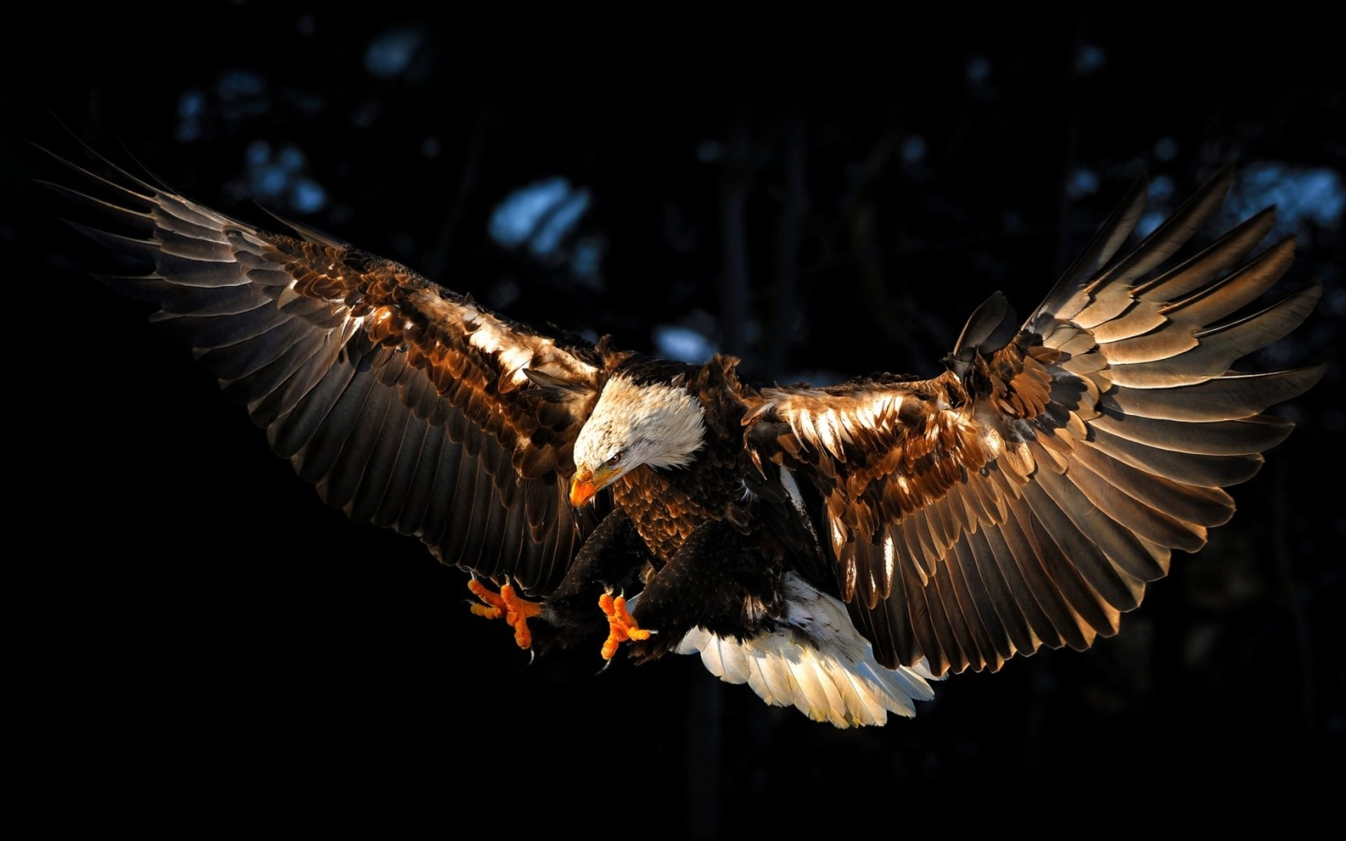 1920x1200 Top 25+ best Eagle wallpaper ideas on Pinterest | Eagles, American eagle  flights and Bald eagle