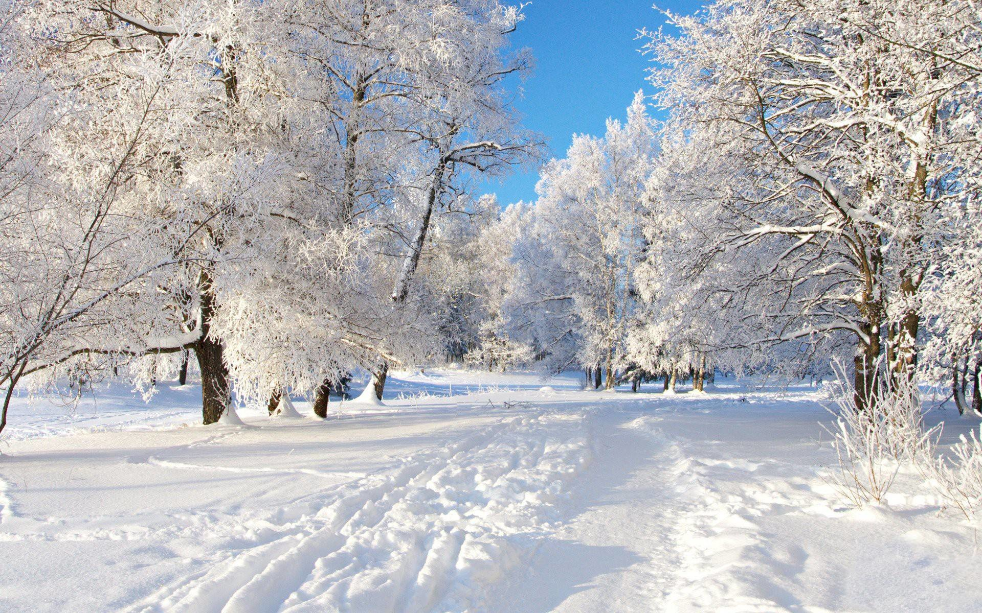 free winter background for computer