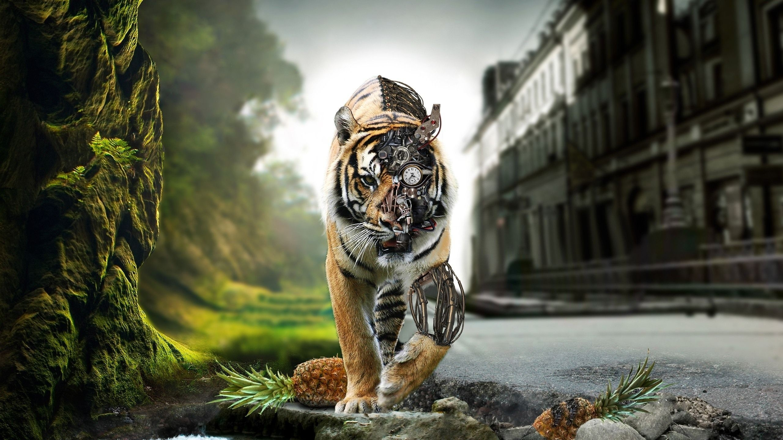 2560x1440 Cool Hd Wallpapers p Lion Wallpapers Kid HD Lion Wallpapers Wallpapers)